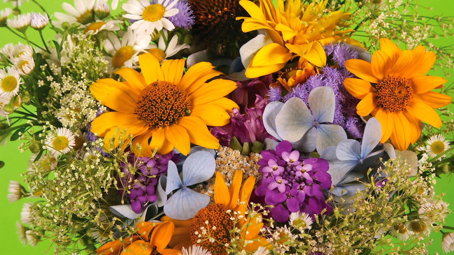 Обои красивые весенние цветы