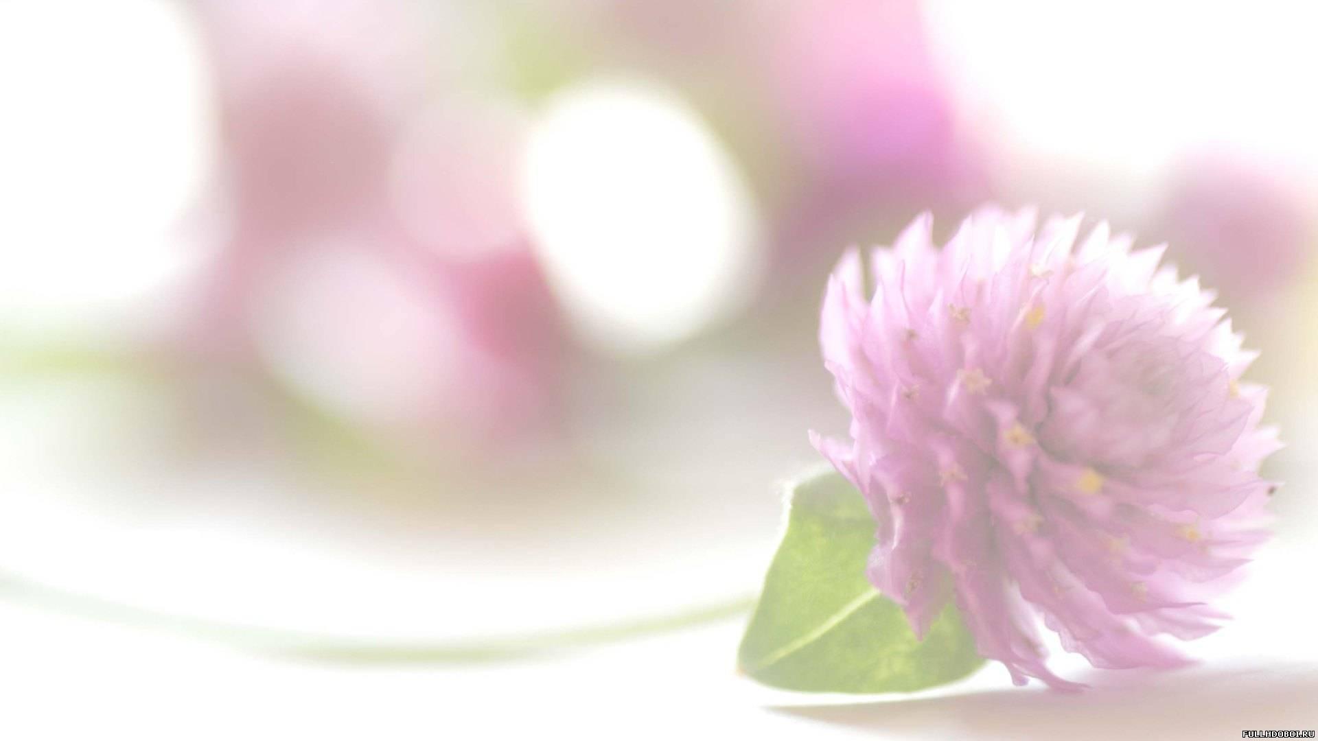 ... картинки Красивые цветы скачать здесь: www.fullhdoboi.ru/photo/flowers/krasivye_cvety/2-0-2398