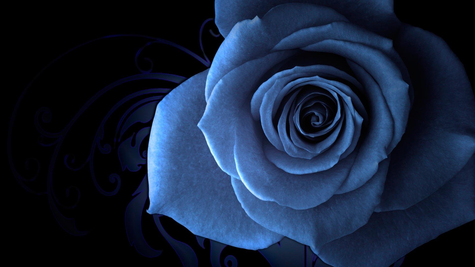 Обои голубая роза макро голубая роза