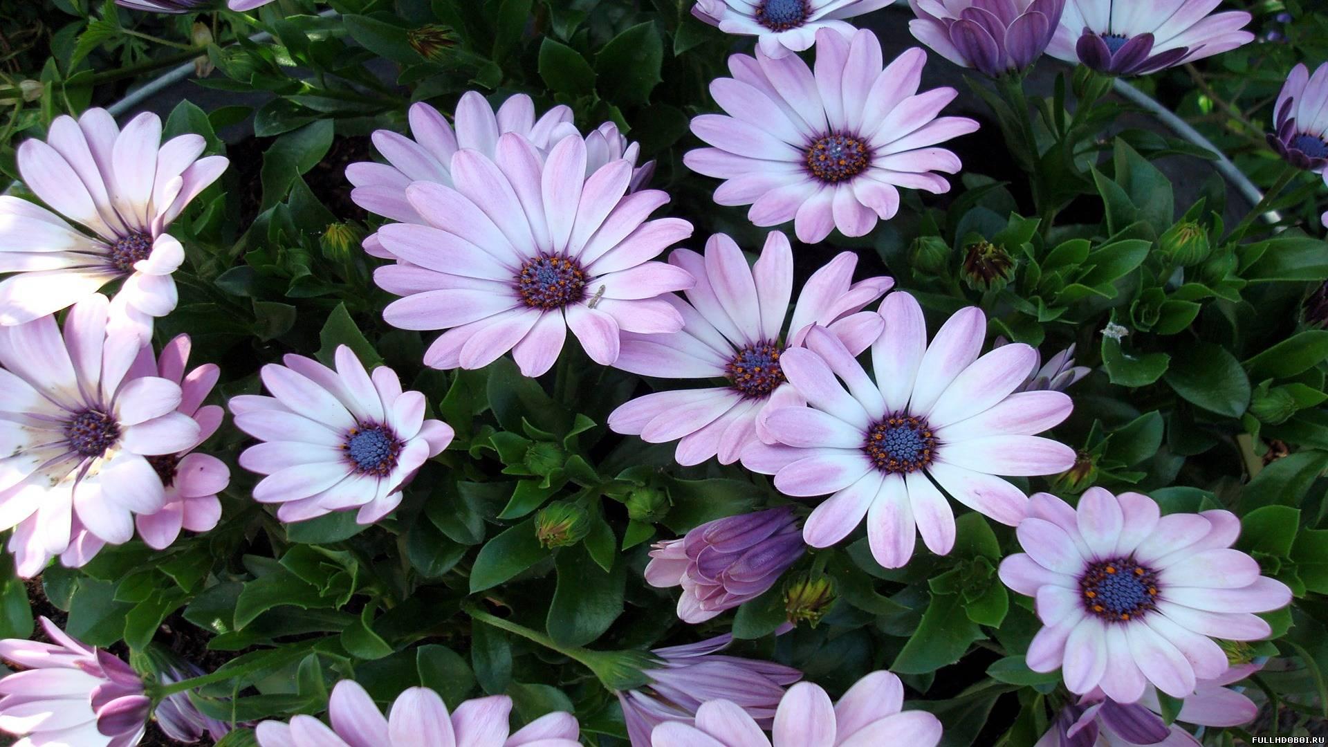 Широкоформатные обои красивые цветы