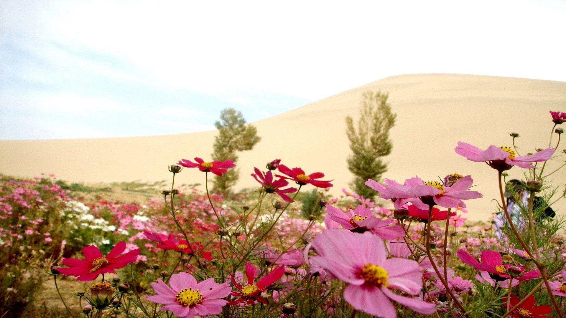 Полевые цветы фото из альбома цветы
