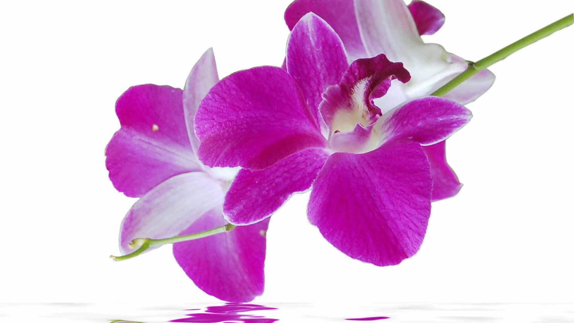 ... Орхидея у воды, Цветок орхидеи у воды: www.fullhdoboi.ru/photo/flowers/orkhideja_u_vody/2-0-21994