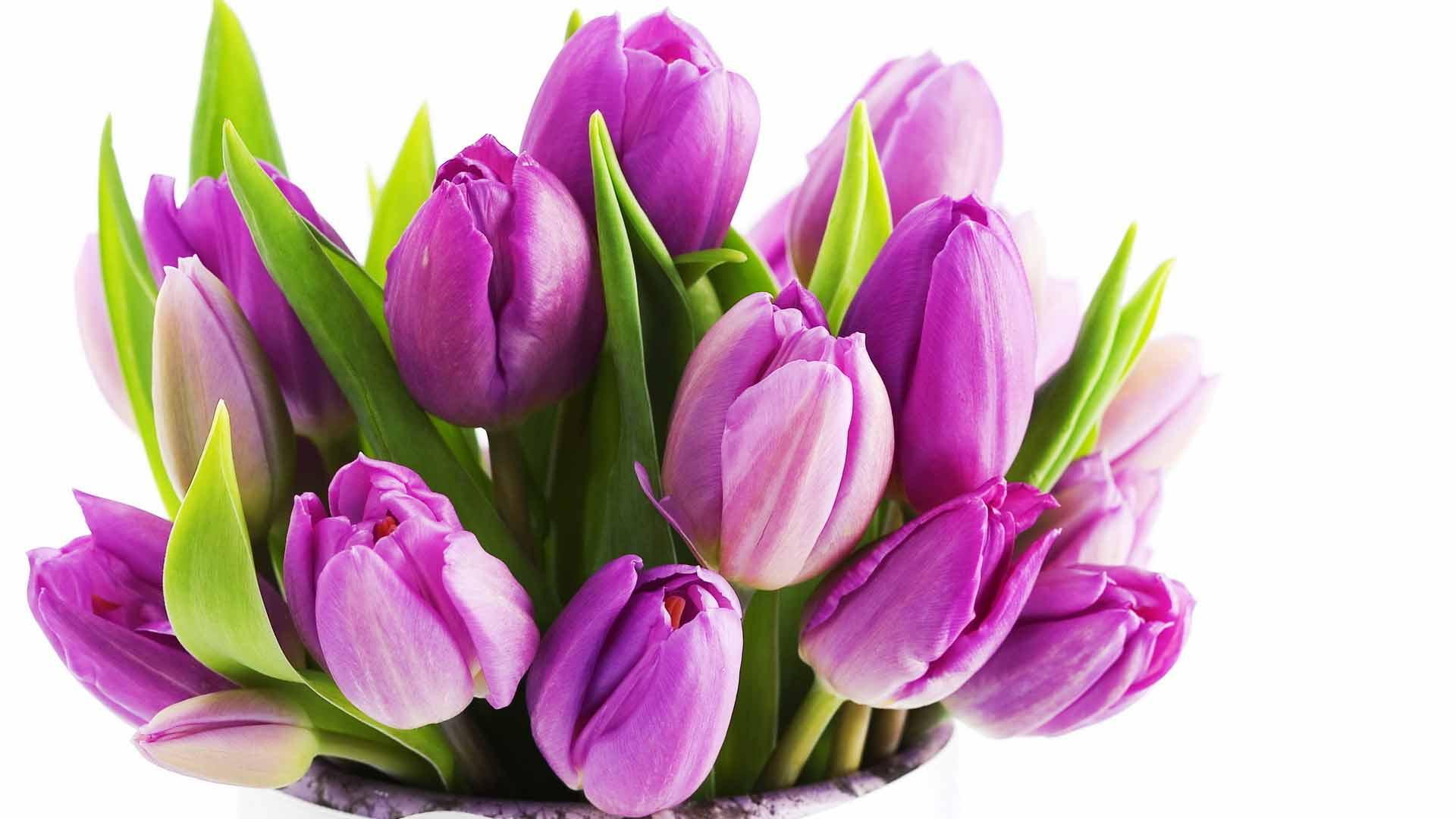 Букет букет лиловых тюльпанов