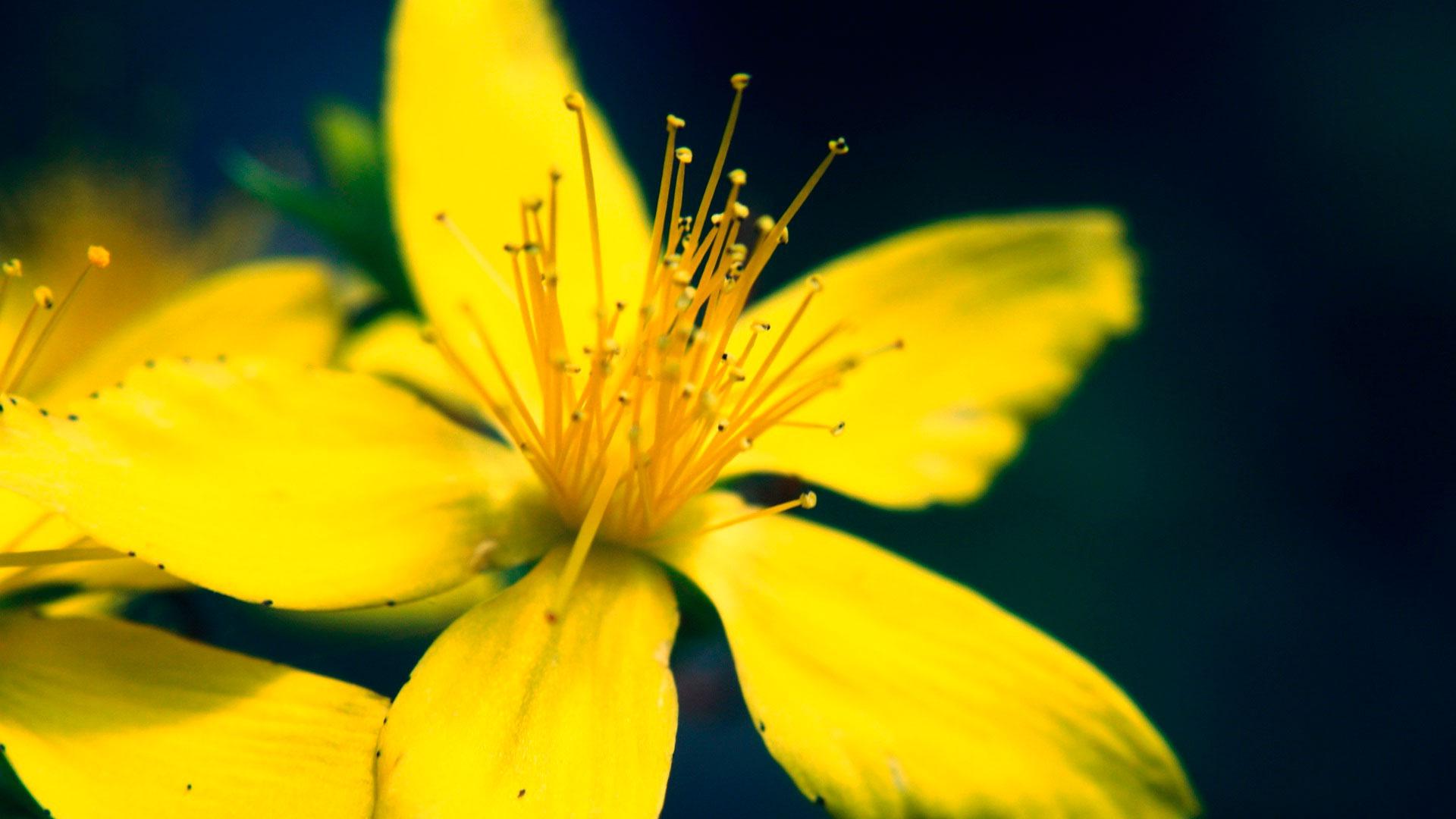 Роза сантана искусственные цветы екатеринбург