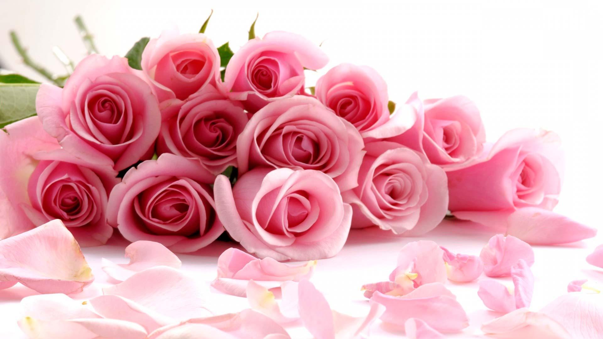 Обои розы с лепестками розовые розы