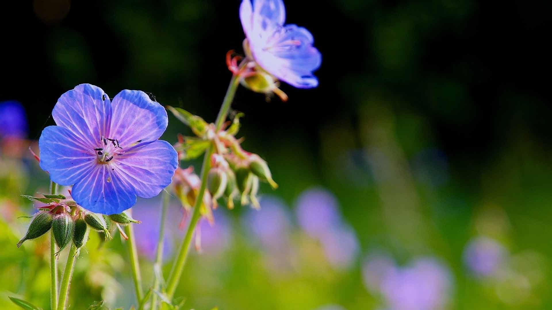 Цветы картинки со стихами 7