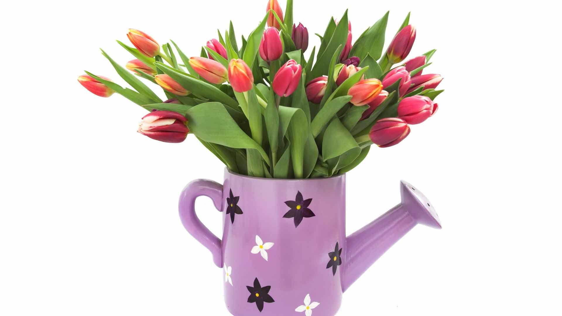 Лейка ваза лейка и букет тюльпанов