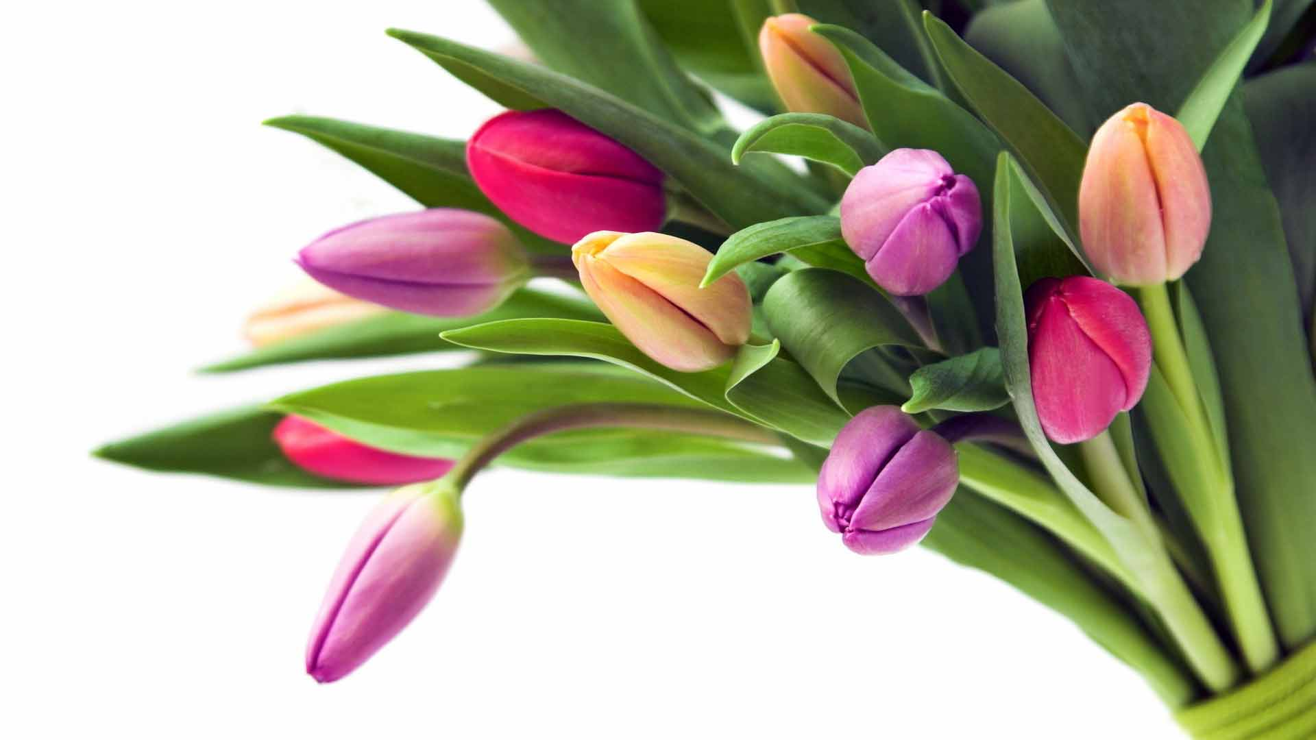 картинки на рабочий стол цветы осень