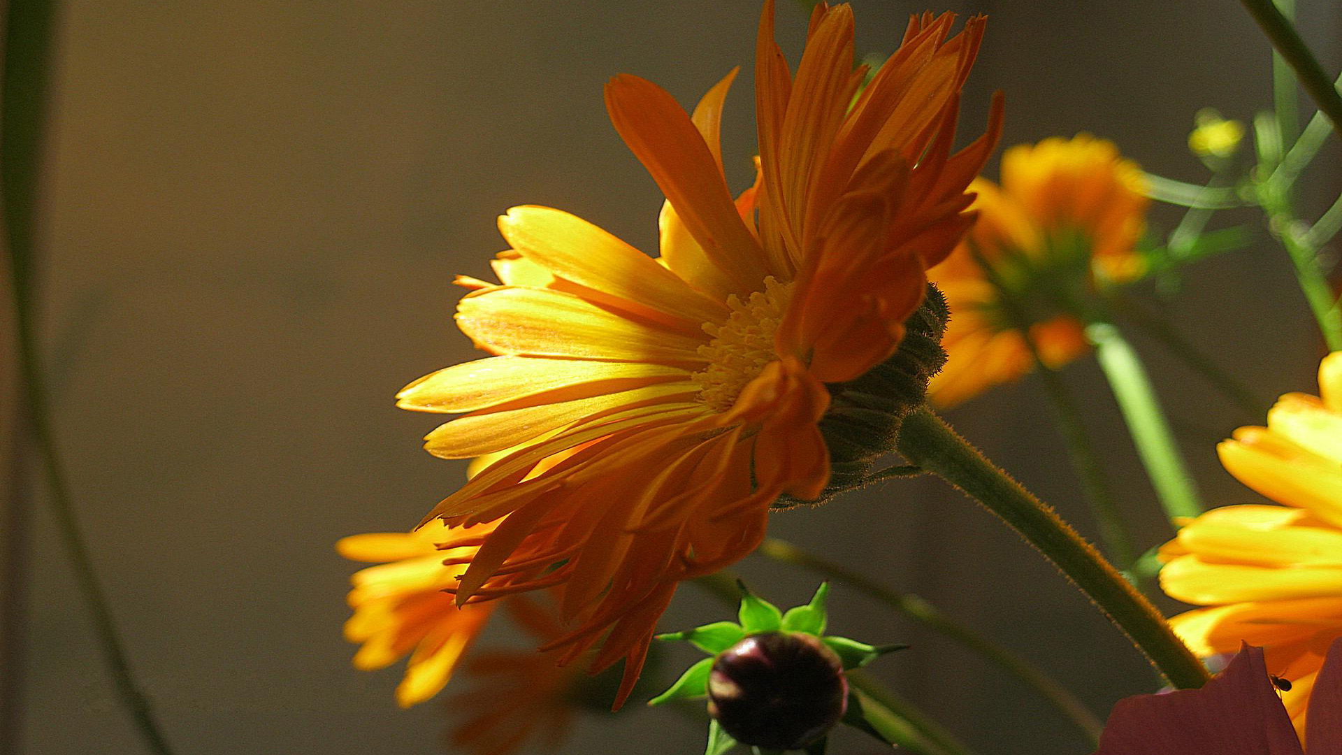 Цветы в полумраке