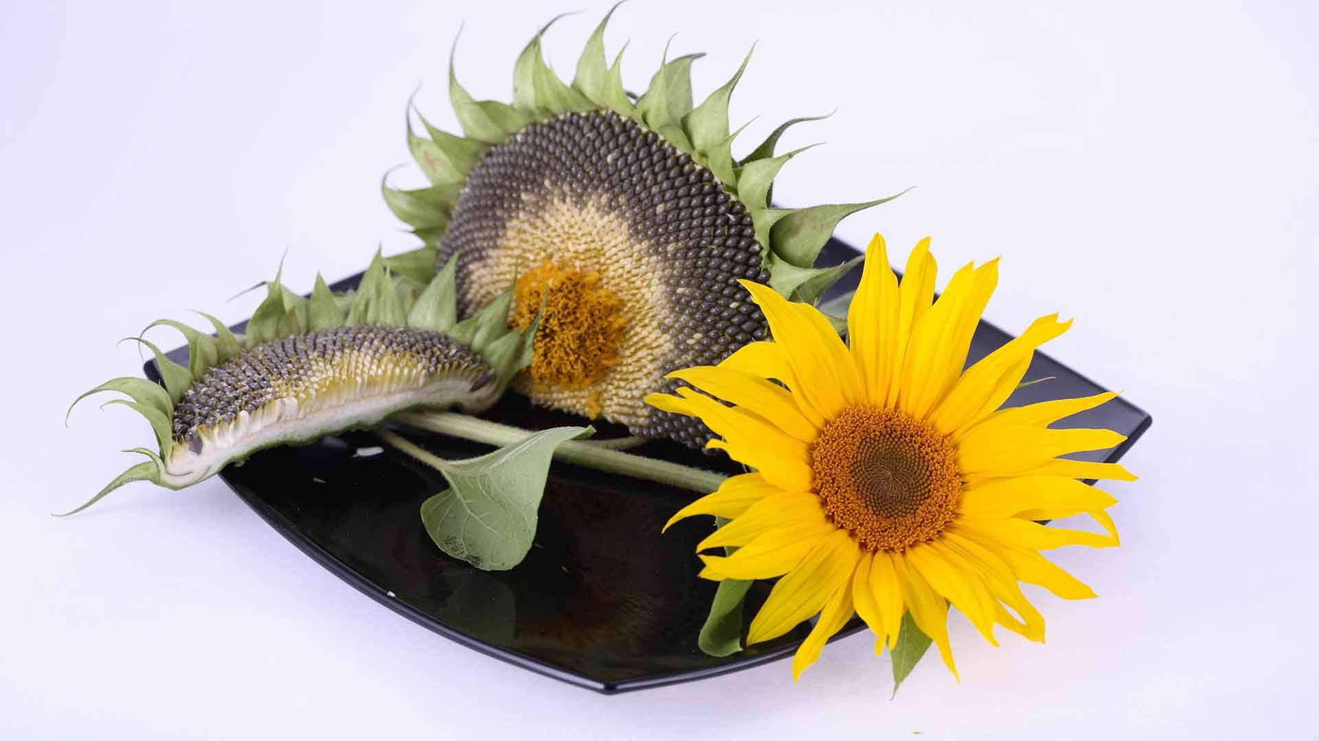 Цветы и семена цветы и семена