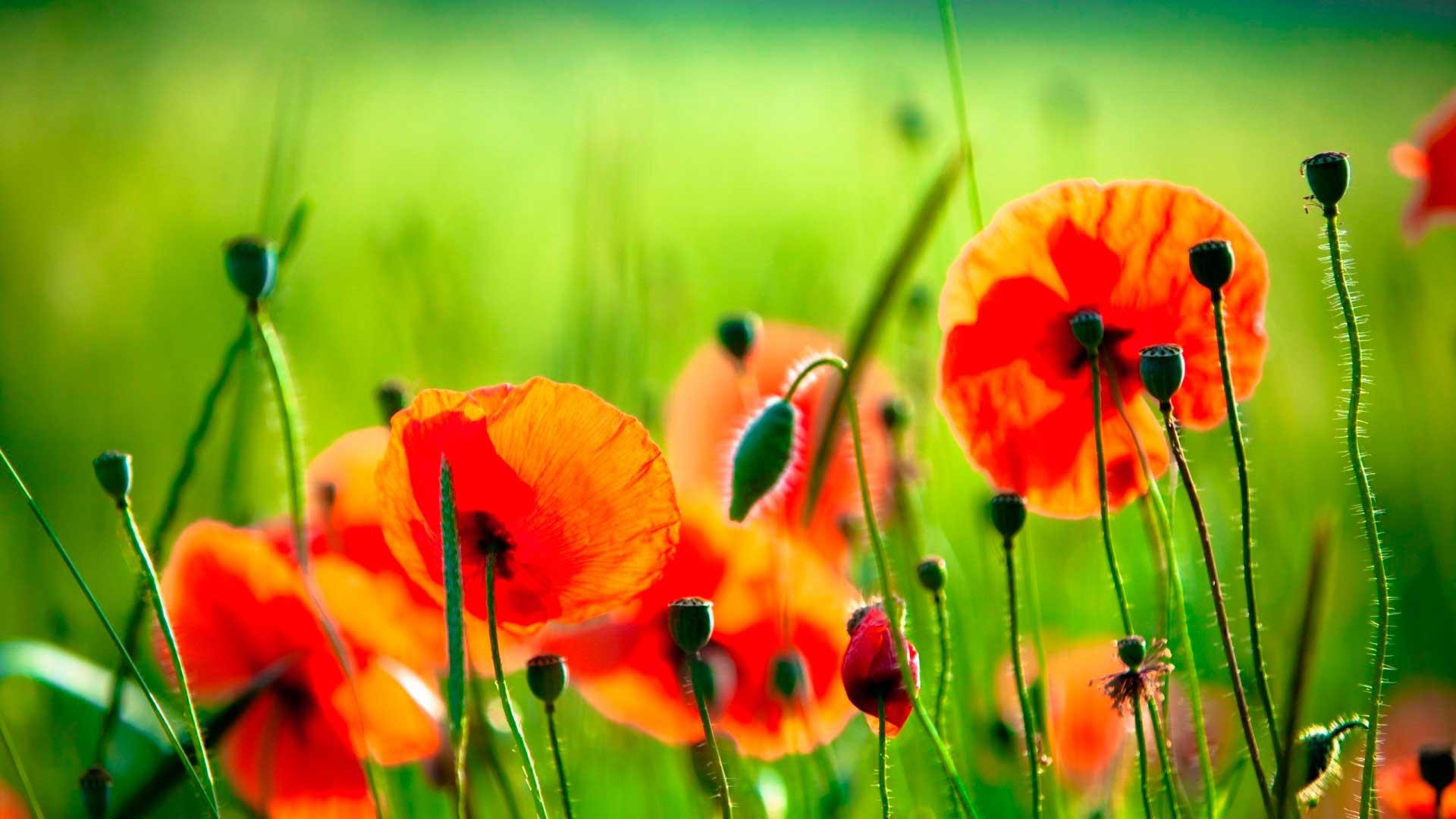 Фото цветы в лучах солнца 66