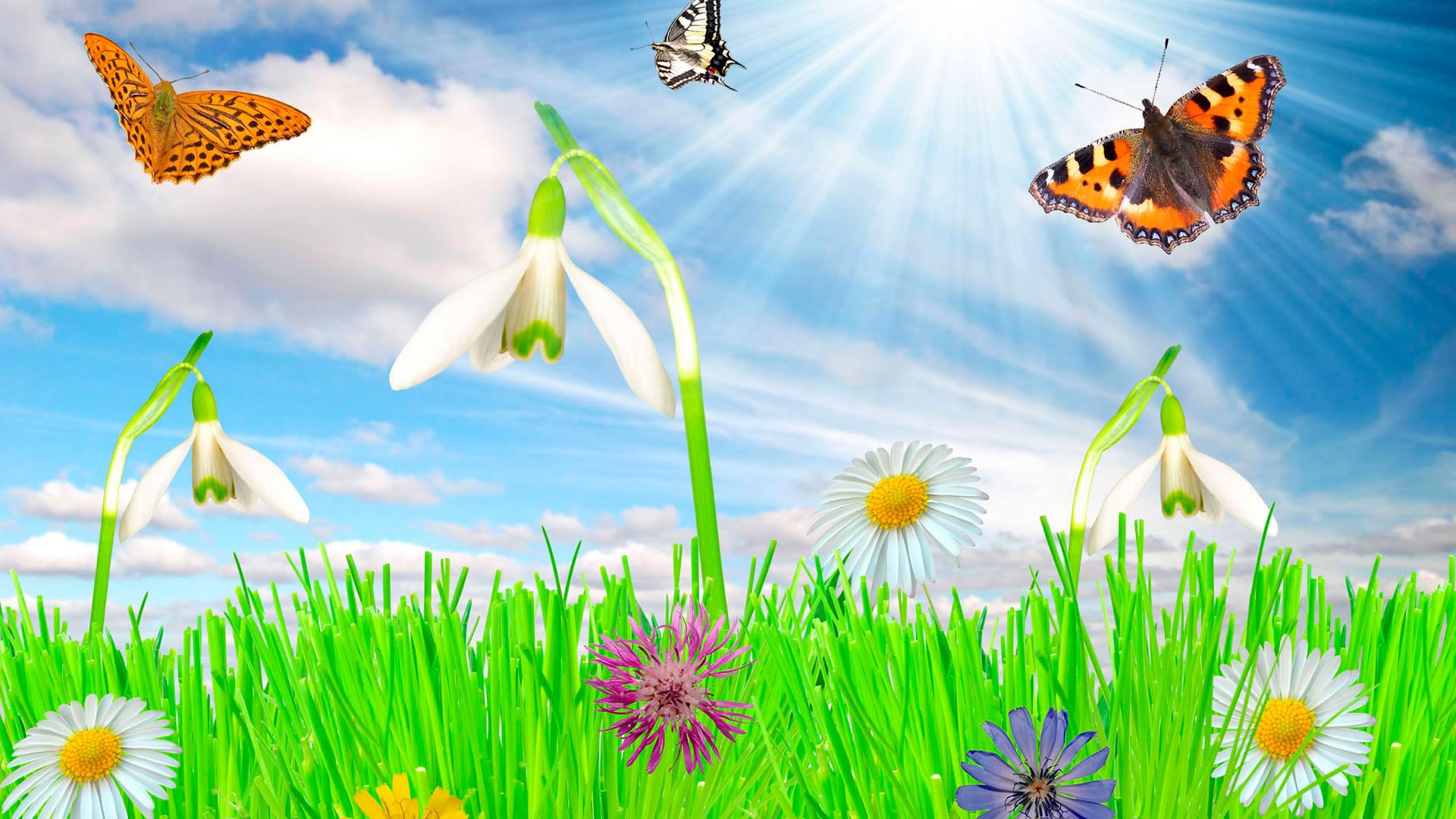 Широкоформатные картинки весны на рабочий стол