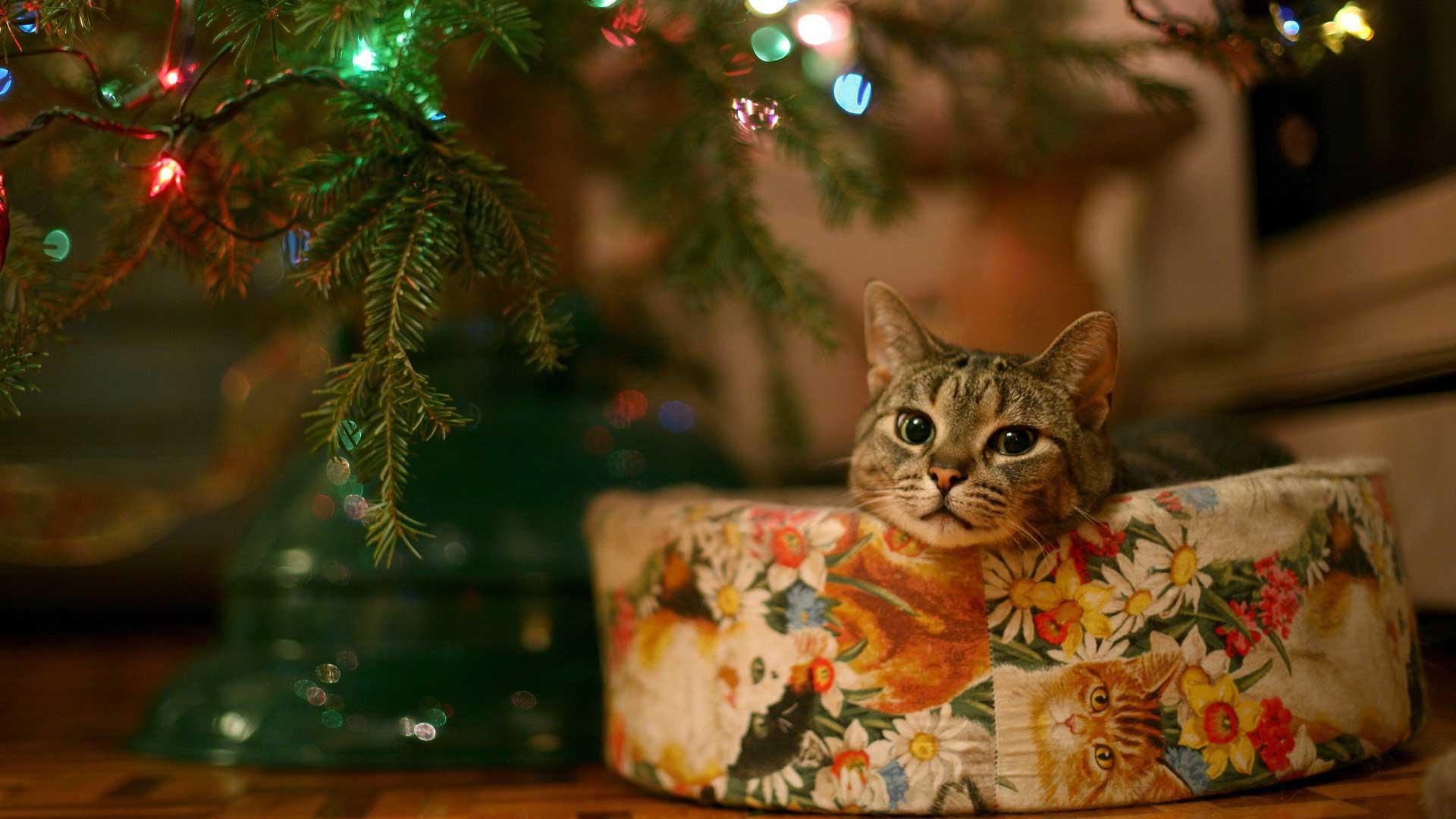Картинки по запросу елка и коты