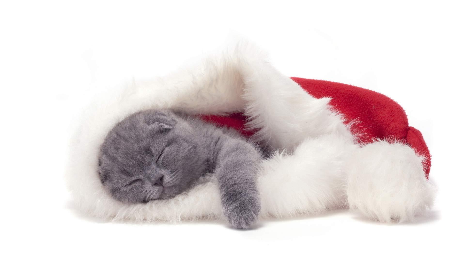 рыжик котик фото