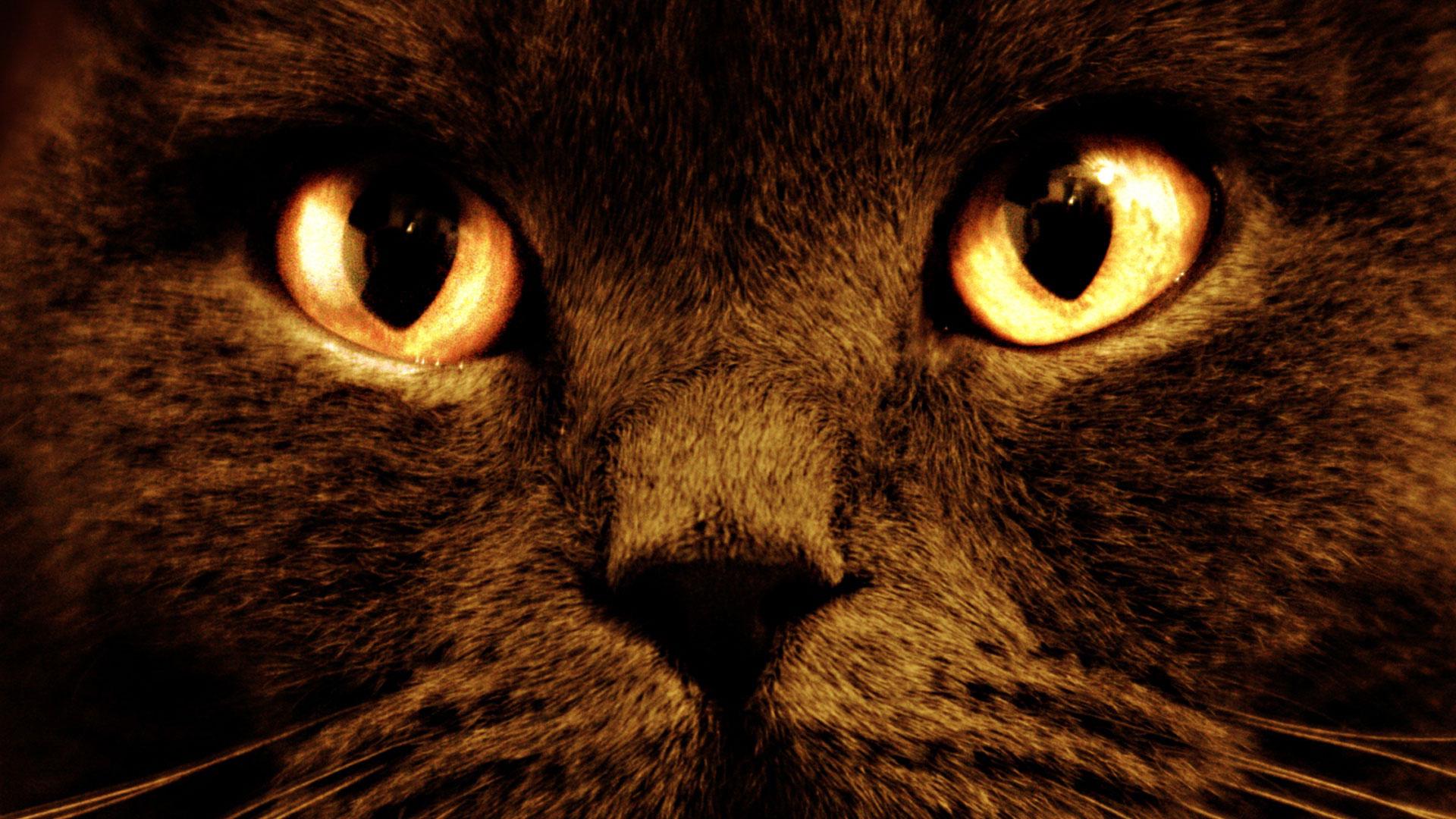 Фото кота морда