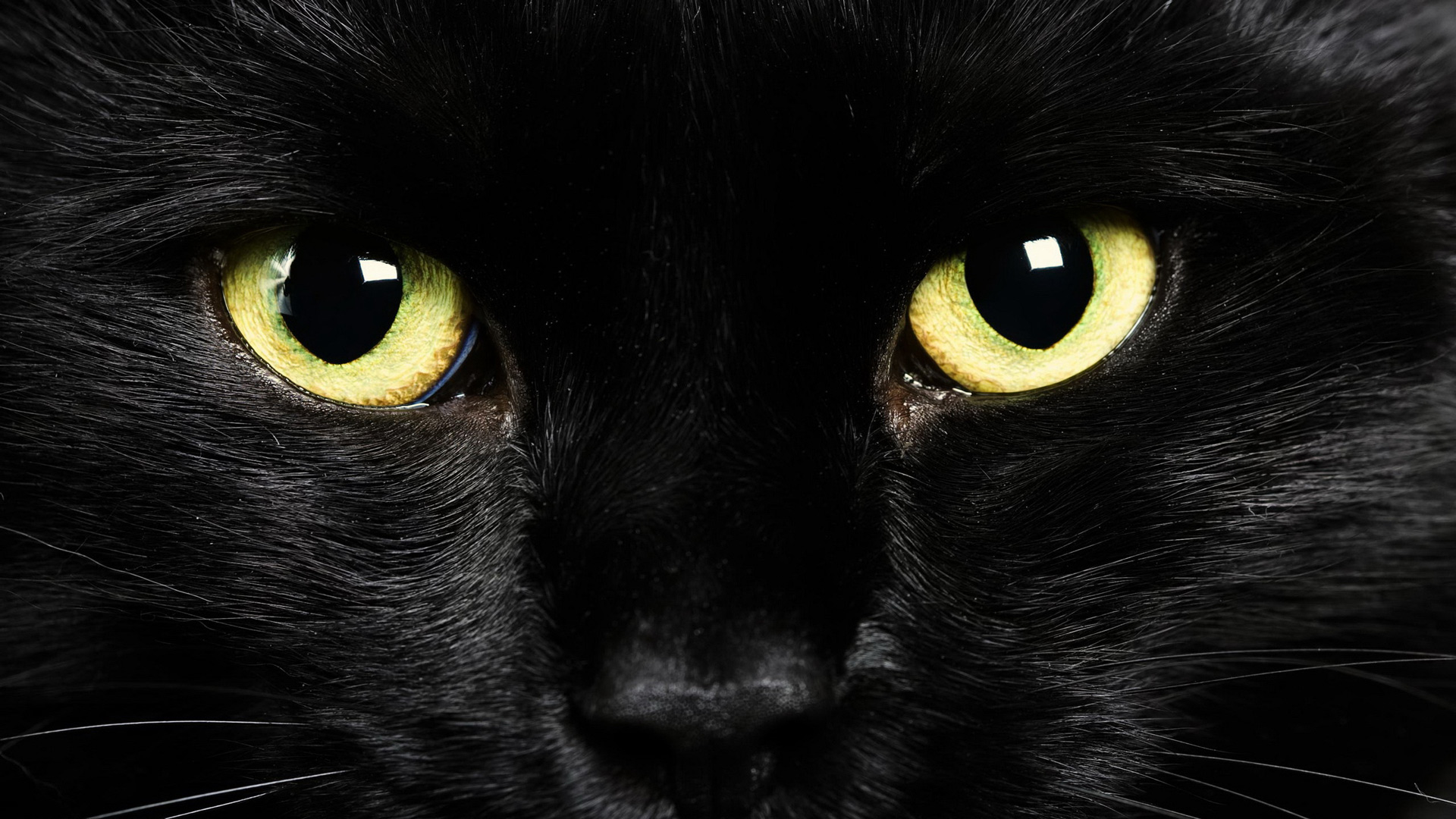 Кошка анфас красивая кошка анфасом