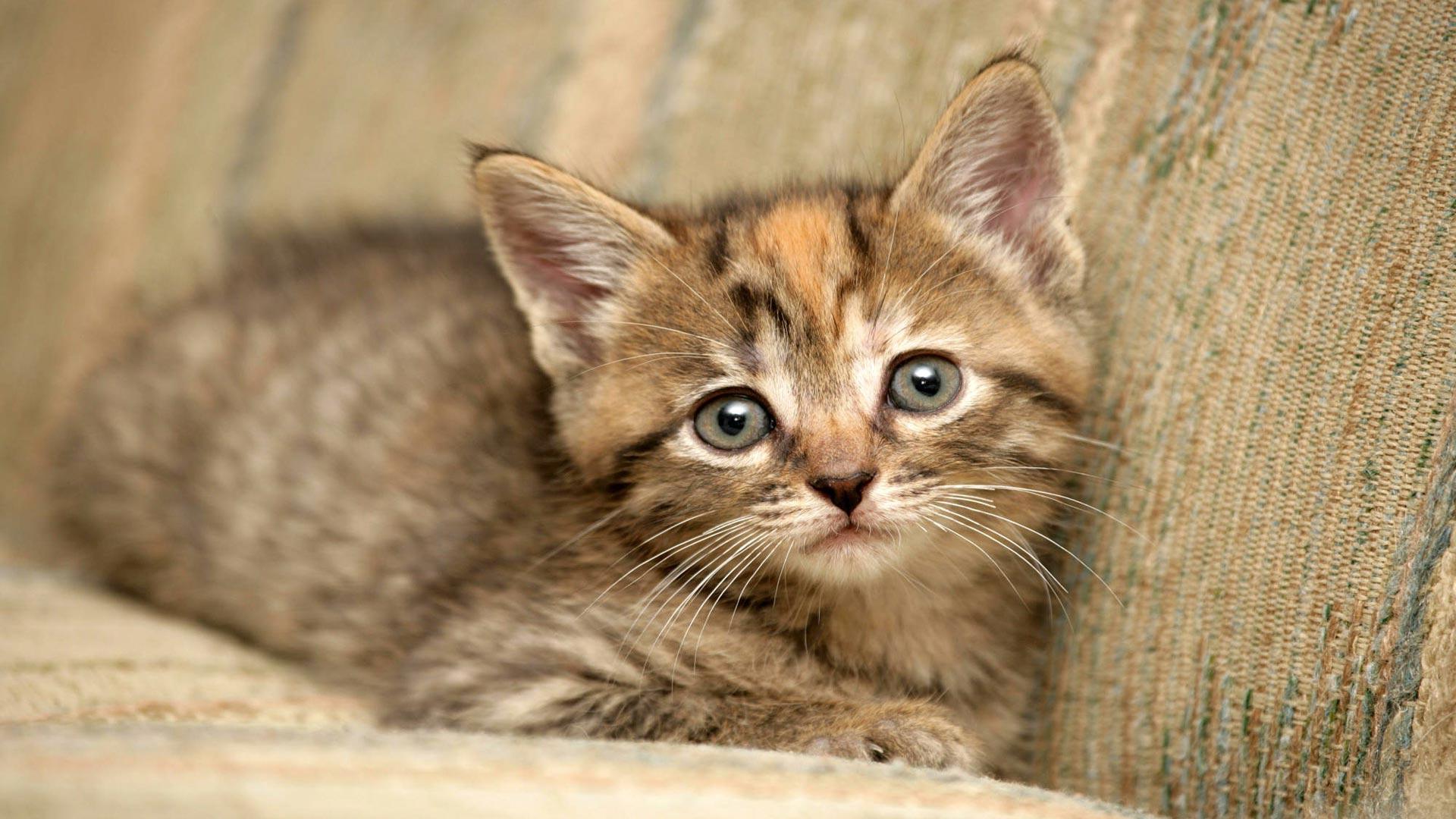 Красивый котенок красивый котенок на