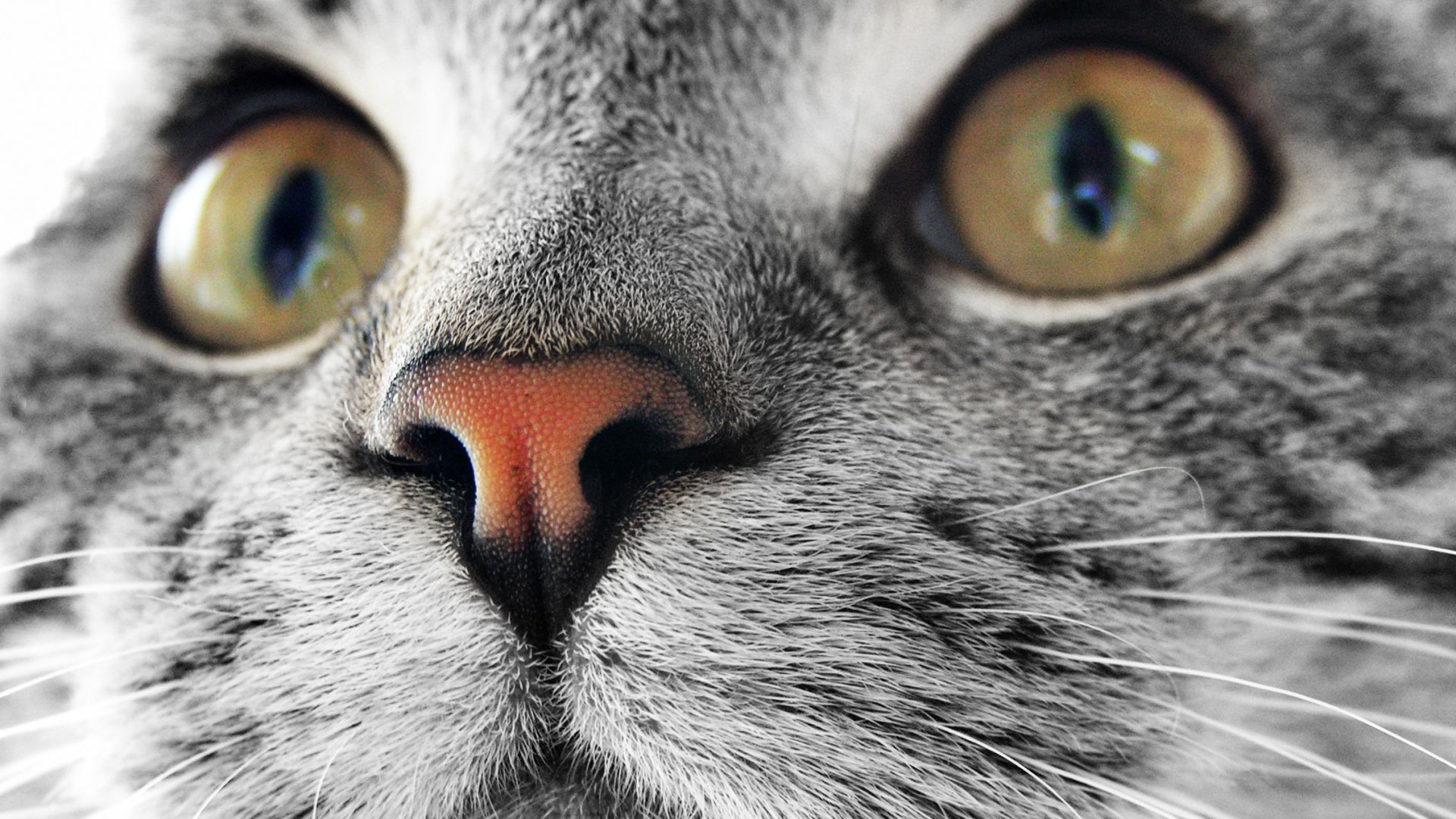 Кошачьи глаза обои на рабочий стол