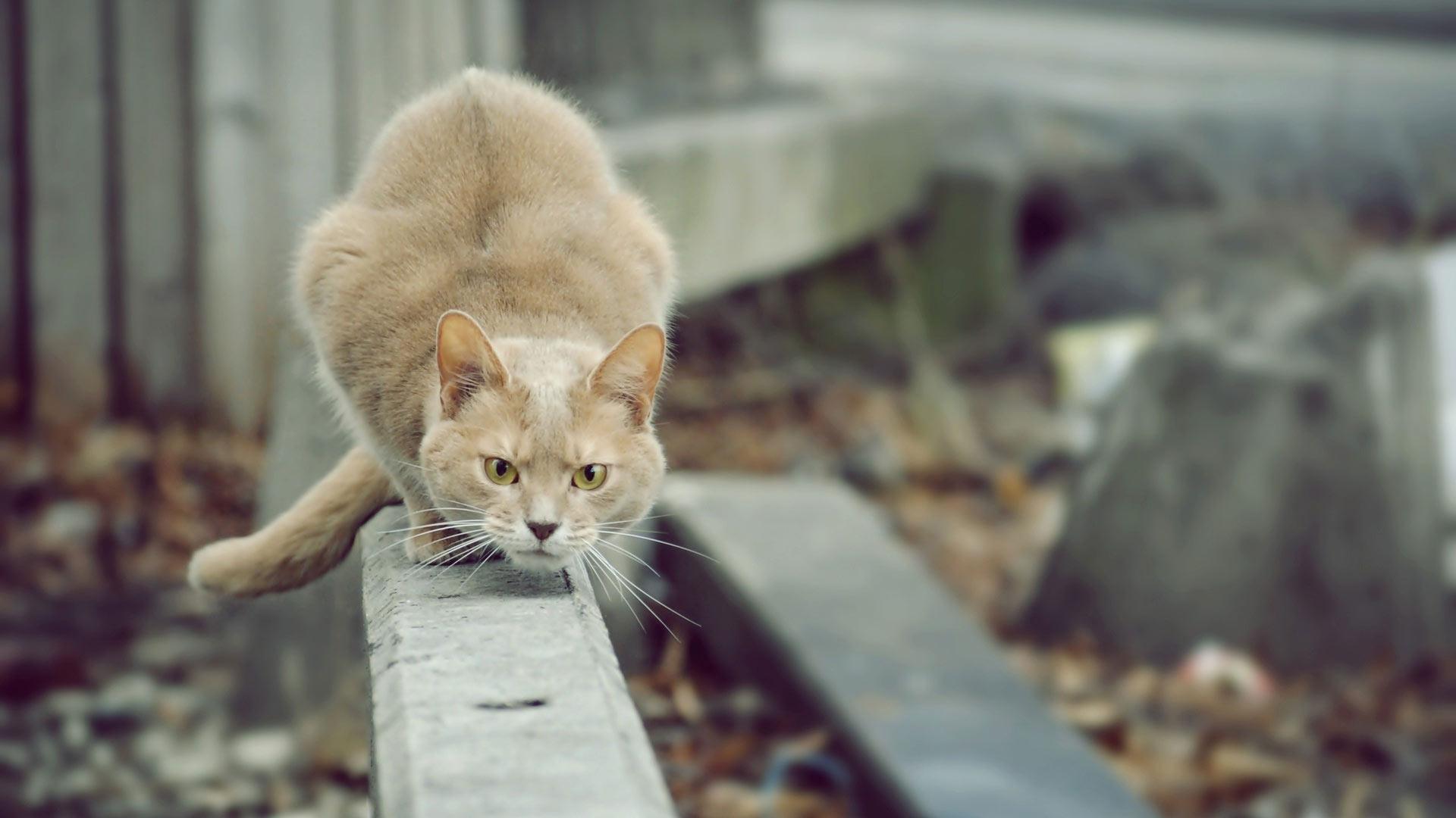 Фото кот на охоте