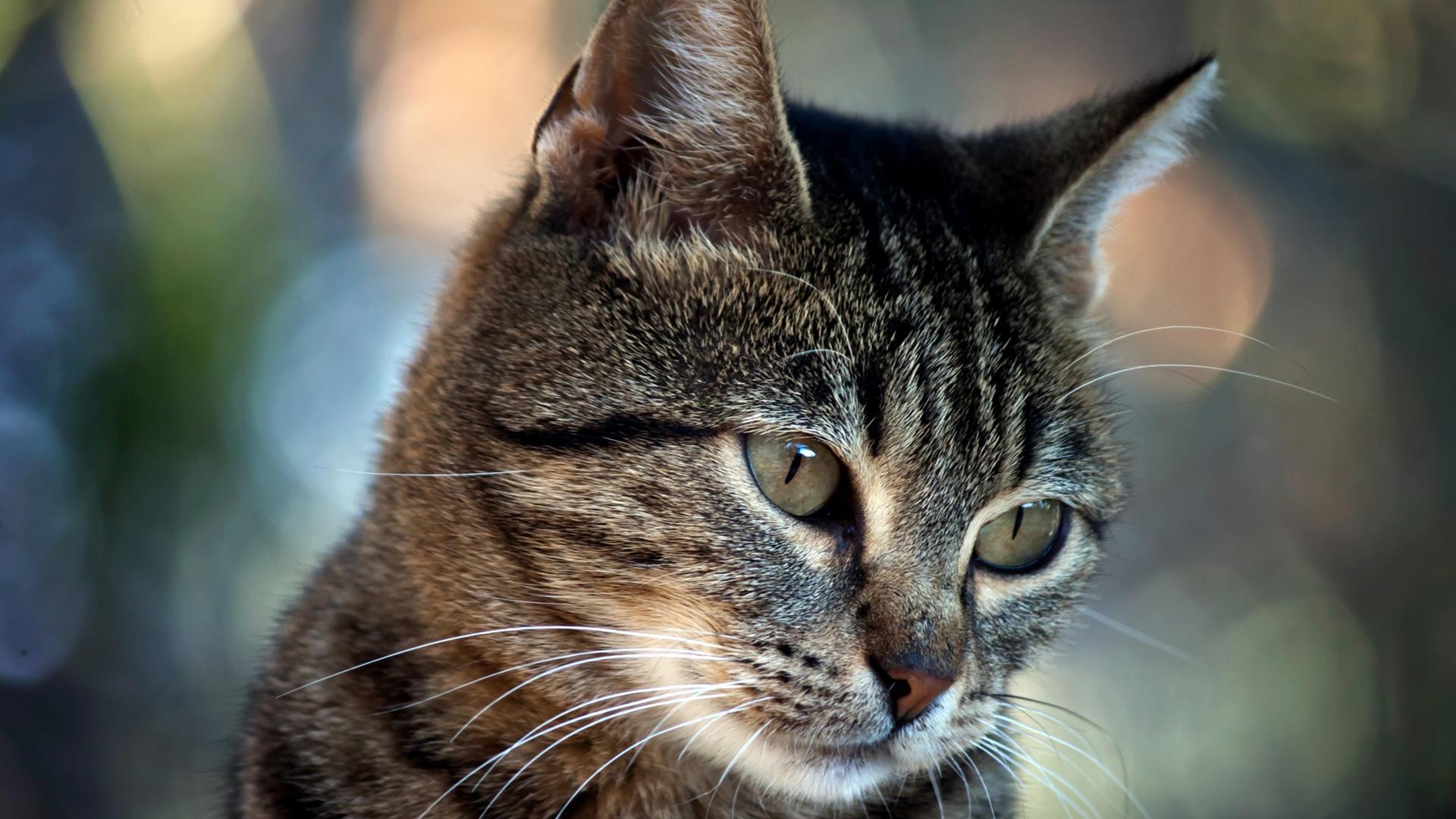 Широкоформатные обои Задумчивый кот, Кот с задумчивым взглядом.