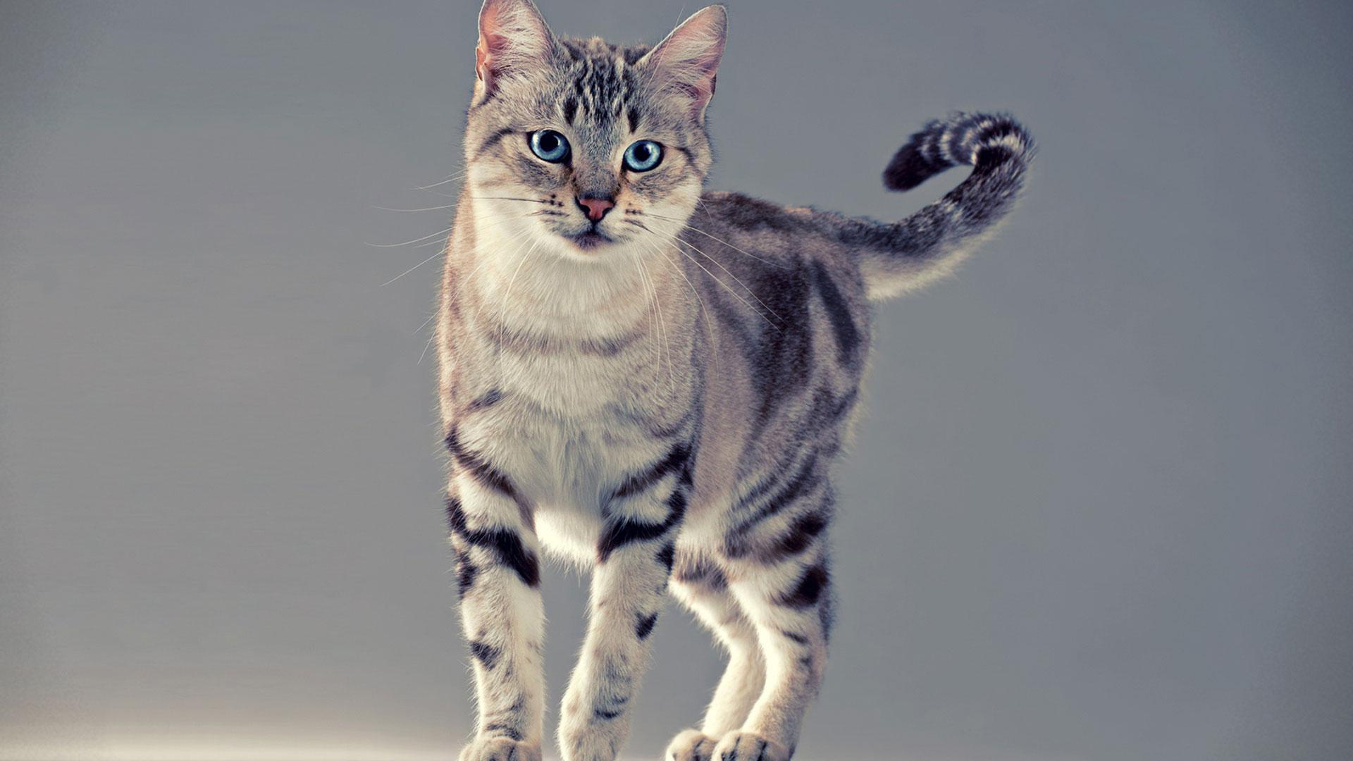 Кот изящный