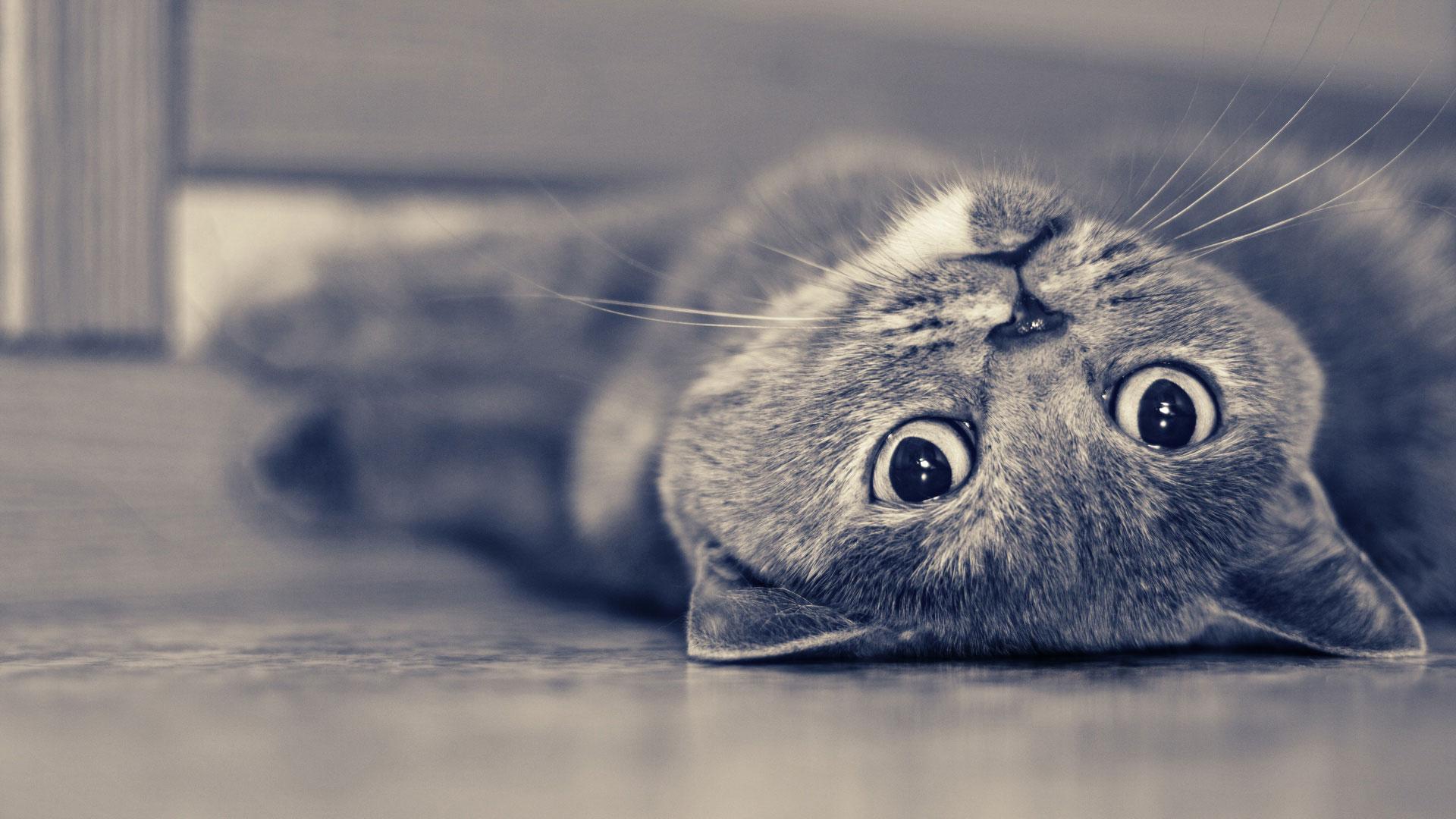 Котики картинки скачать