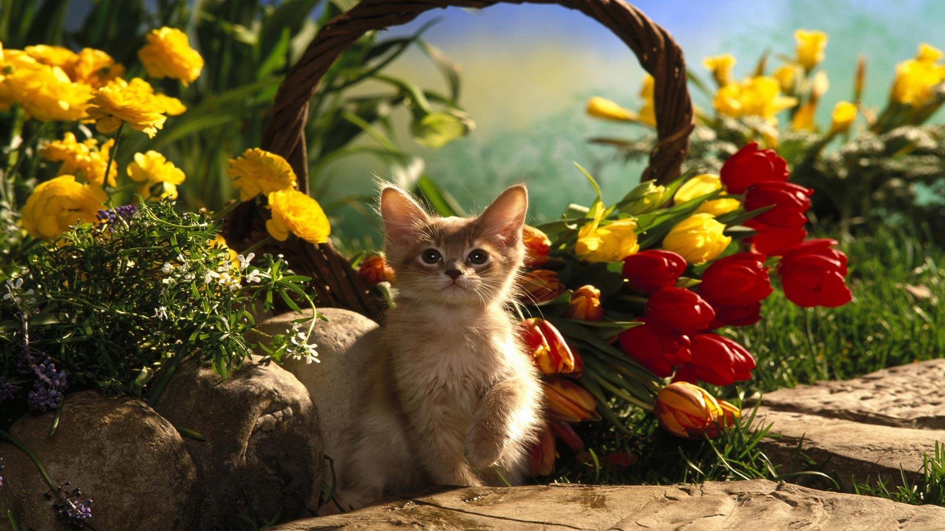 Котята для детей цветок