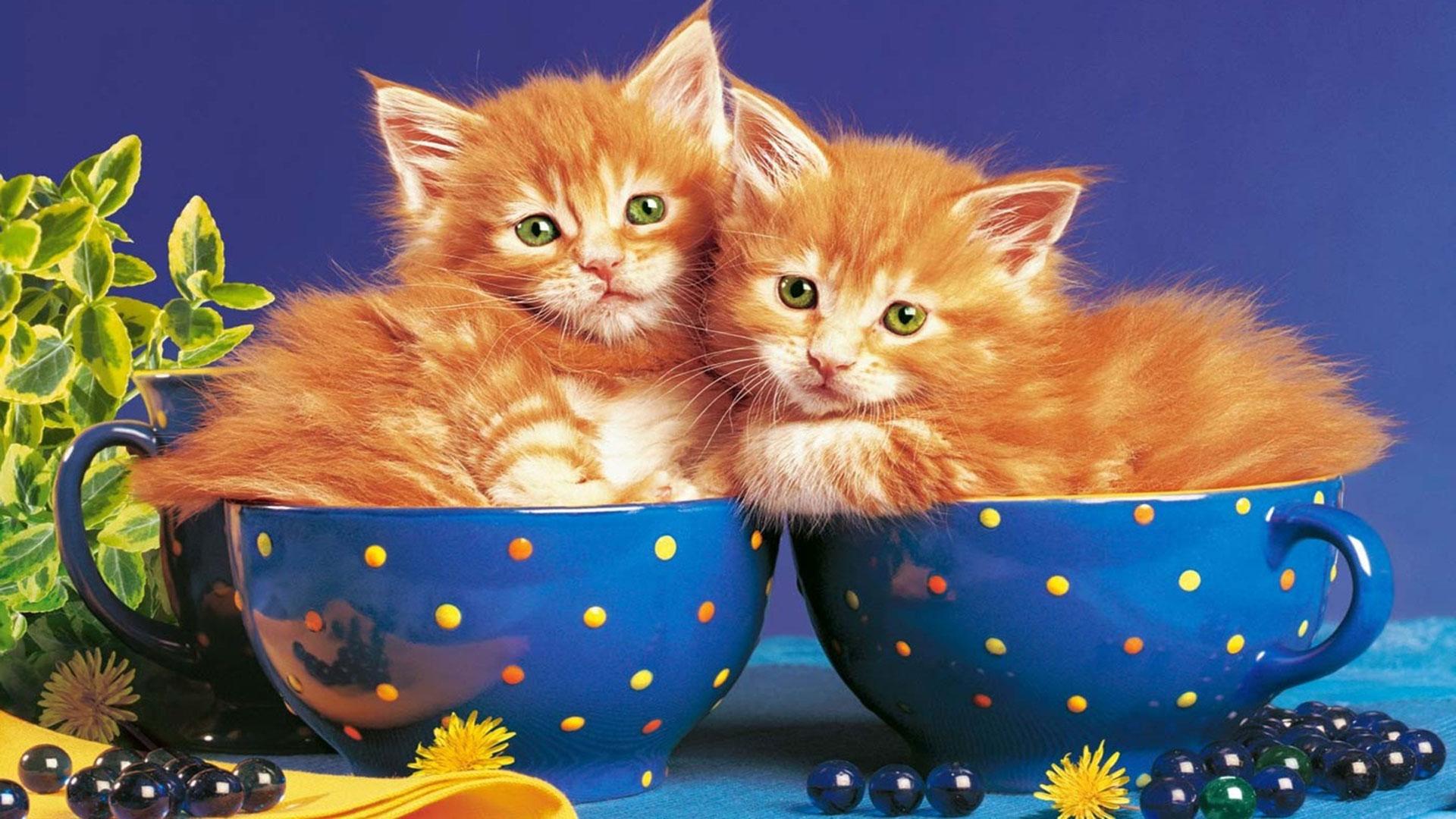 Обои для рабочего стола кошки рыжие