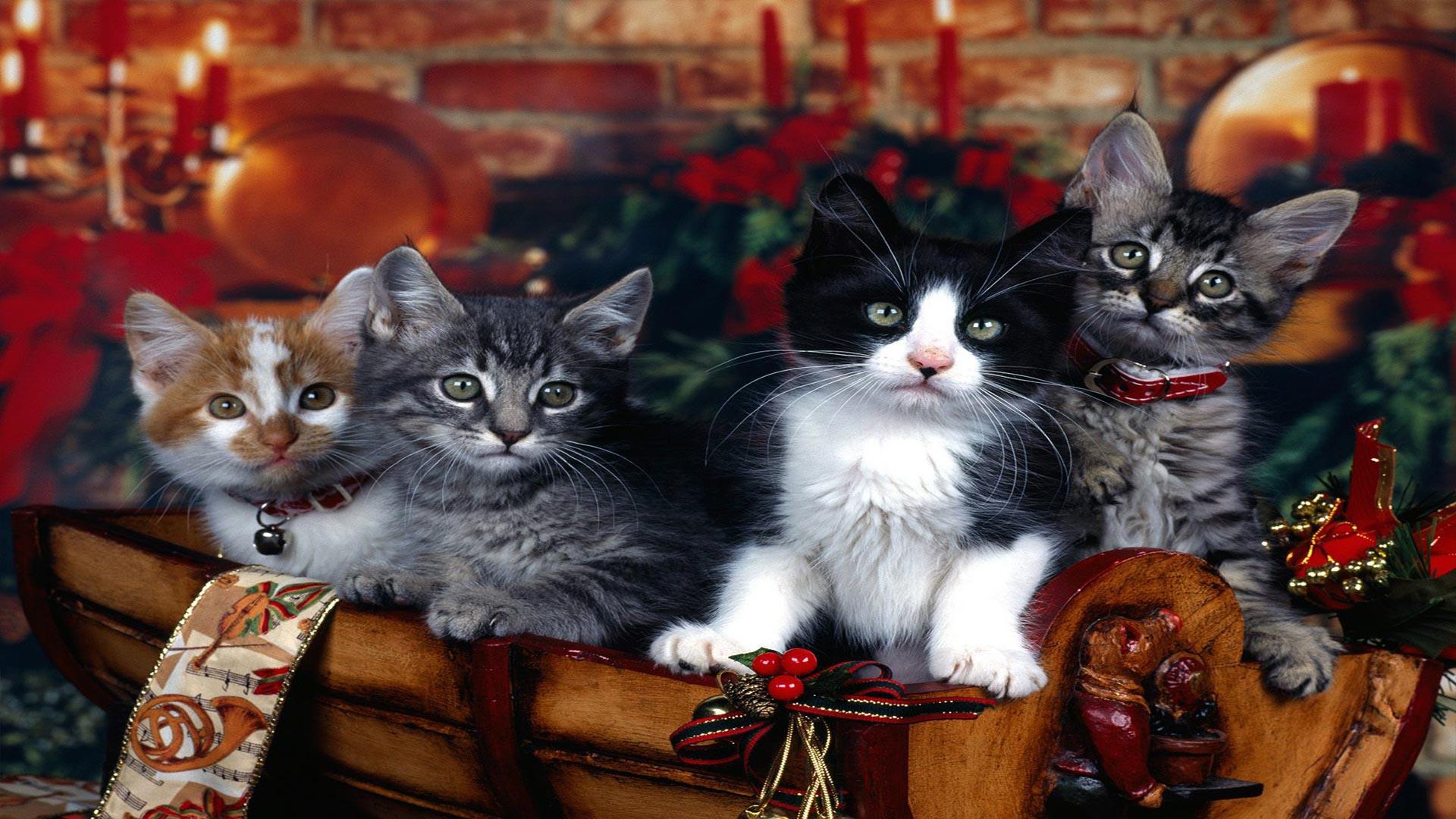 Обои на рабочий стол 1366х768 кошка