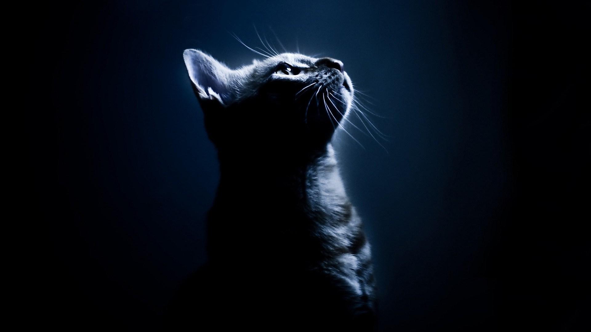 луна кот обои на рабочий стол № 573609 без смс