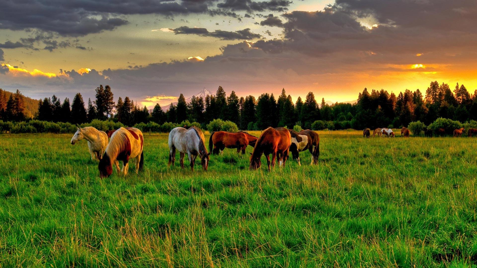 Лошади  купить жеребцов кобыл и жеребят в Иркутской