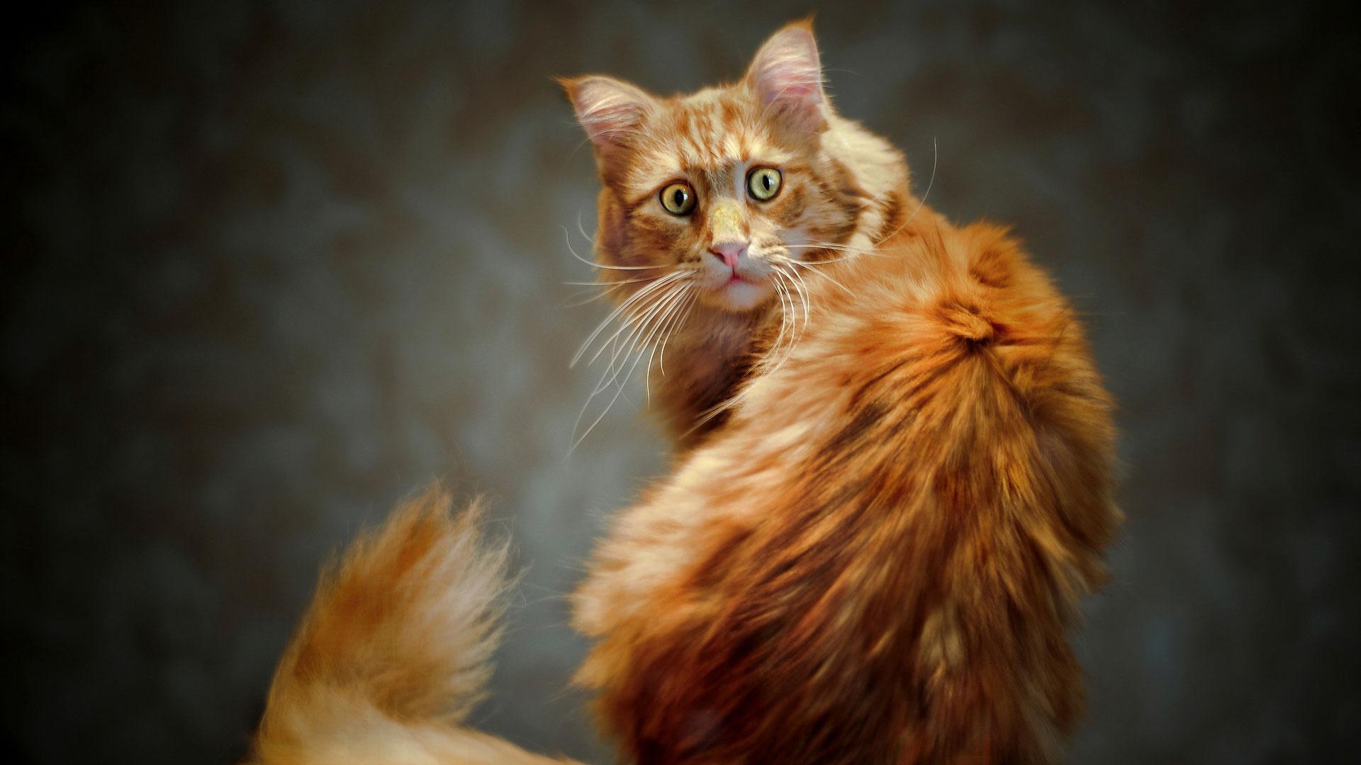 Удивленный кот удивленный ражий кот
