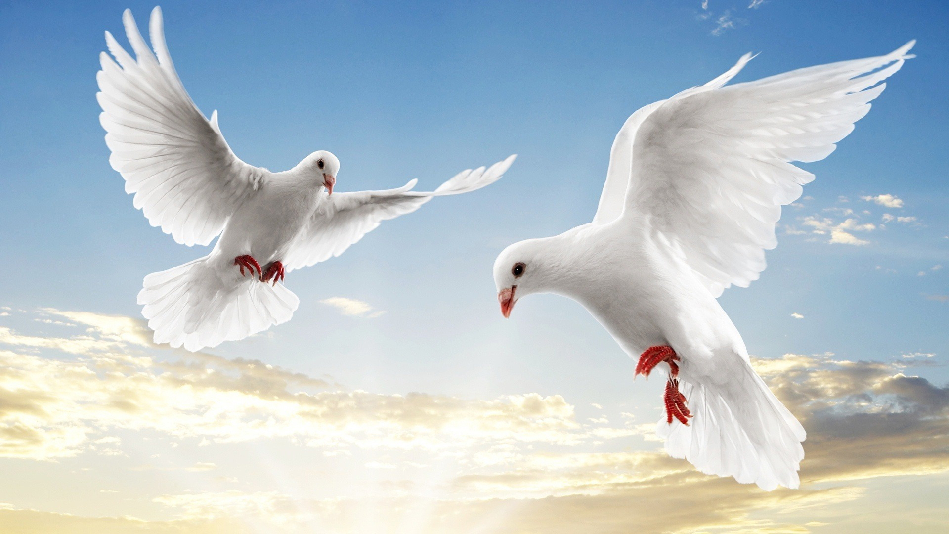 """Оригинал схемы вышивки  """"Белые голуби """" ."""