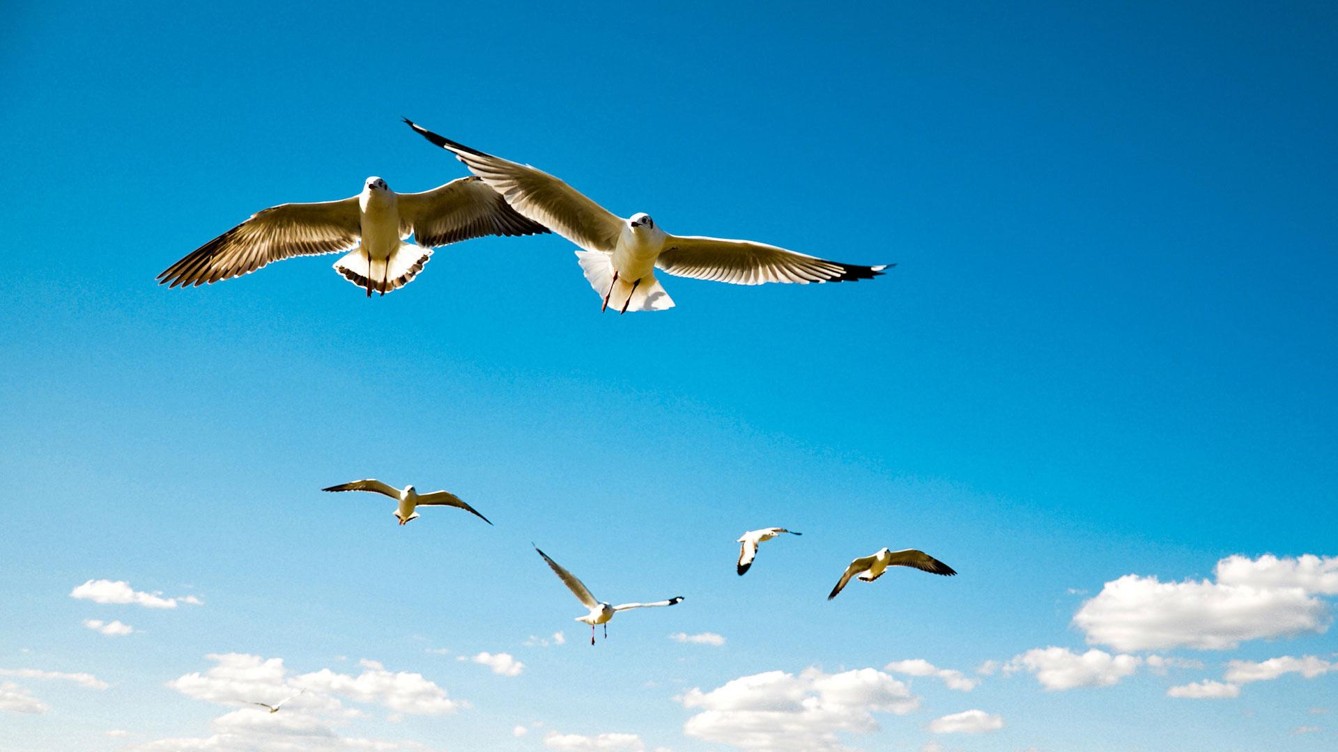 Все народные приметы про перо птицы найти дома на улице