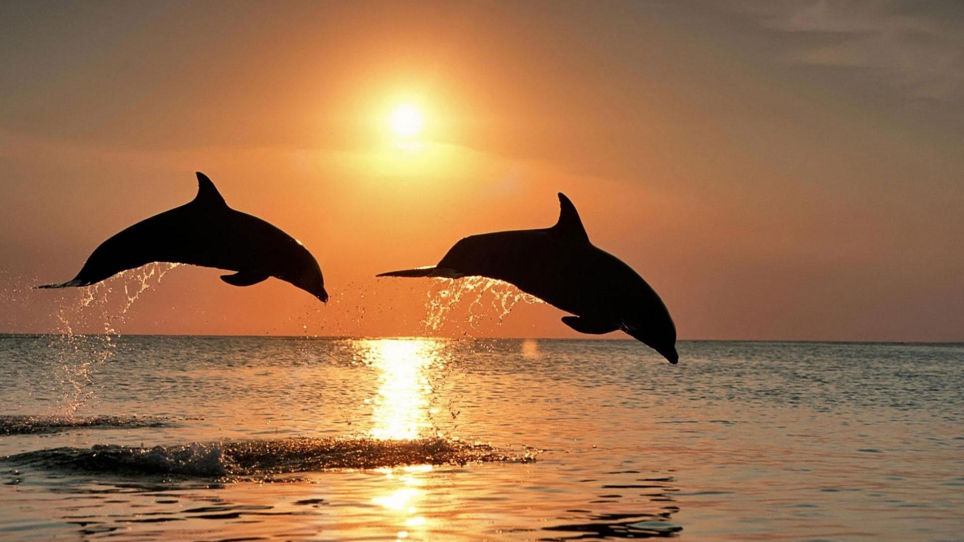 Бесплатно скачать картинки с дельфинами