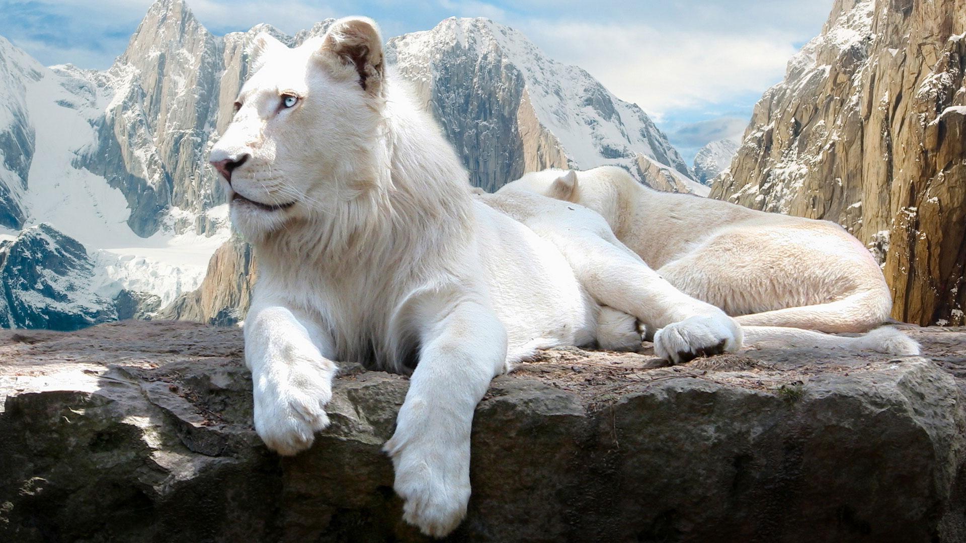 Обои король лев для рабочего стола
