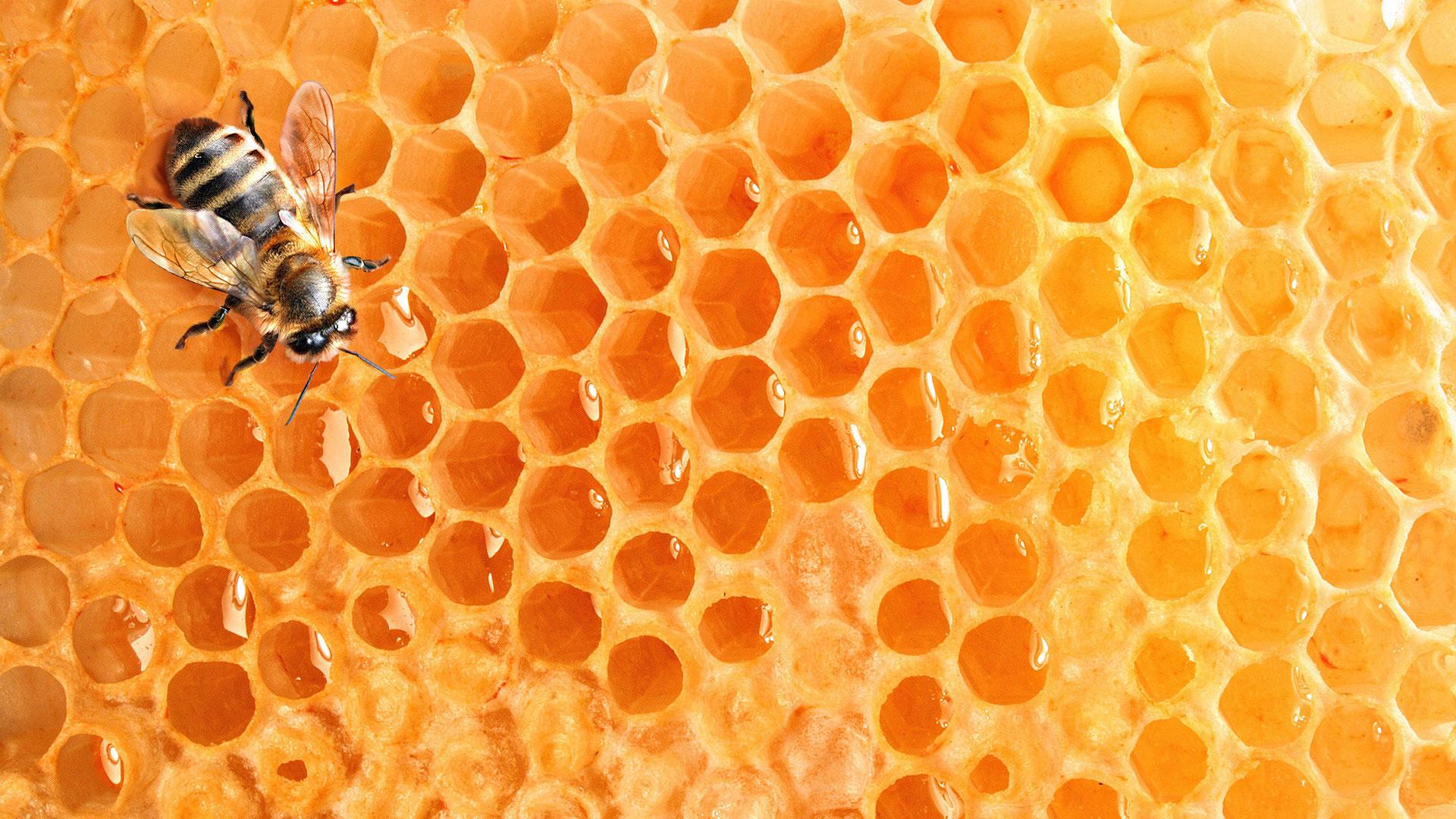 соты. широкоформатные обои на рабочий стол.  Теги. насекомое.  Раздел.  Животные. пчела. воск. мед...