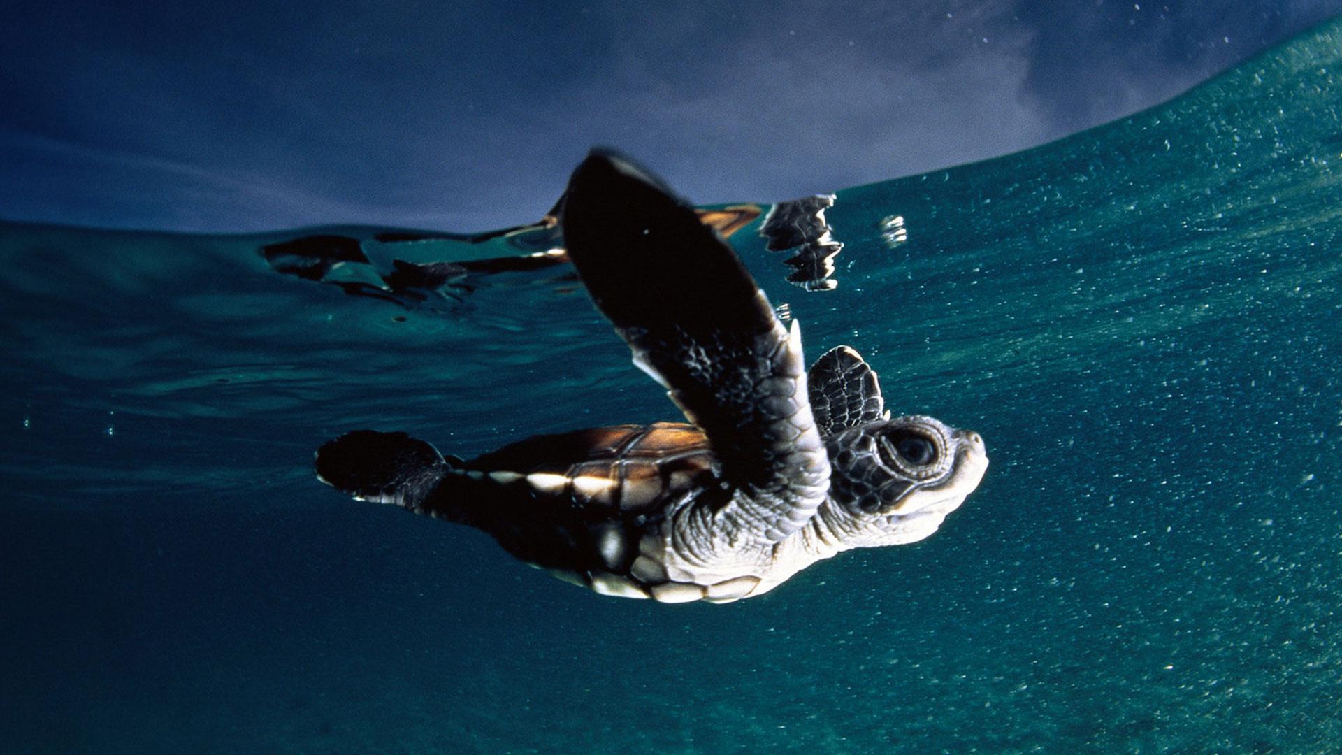 Эрос под водой 11 фотография