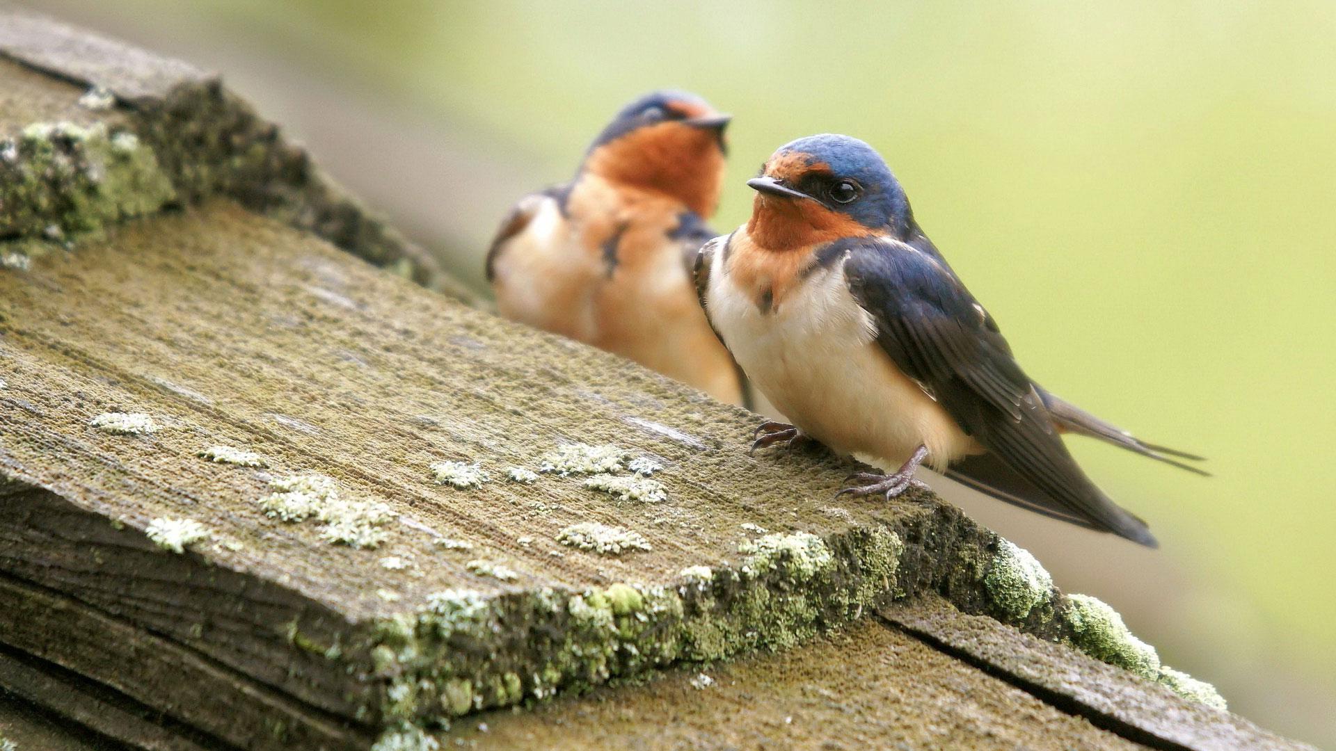 Птицы России Названия виды и описание птиц