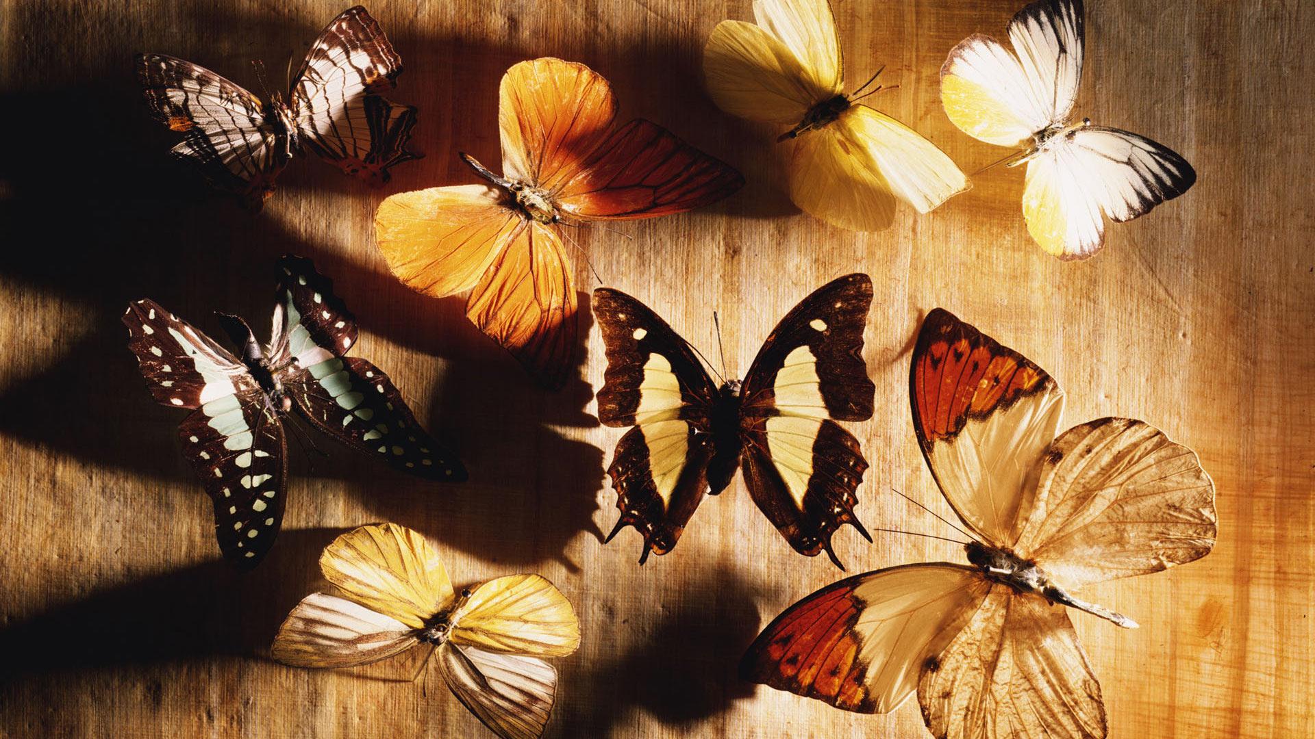 Обои коллекция бабочек для рабочего