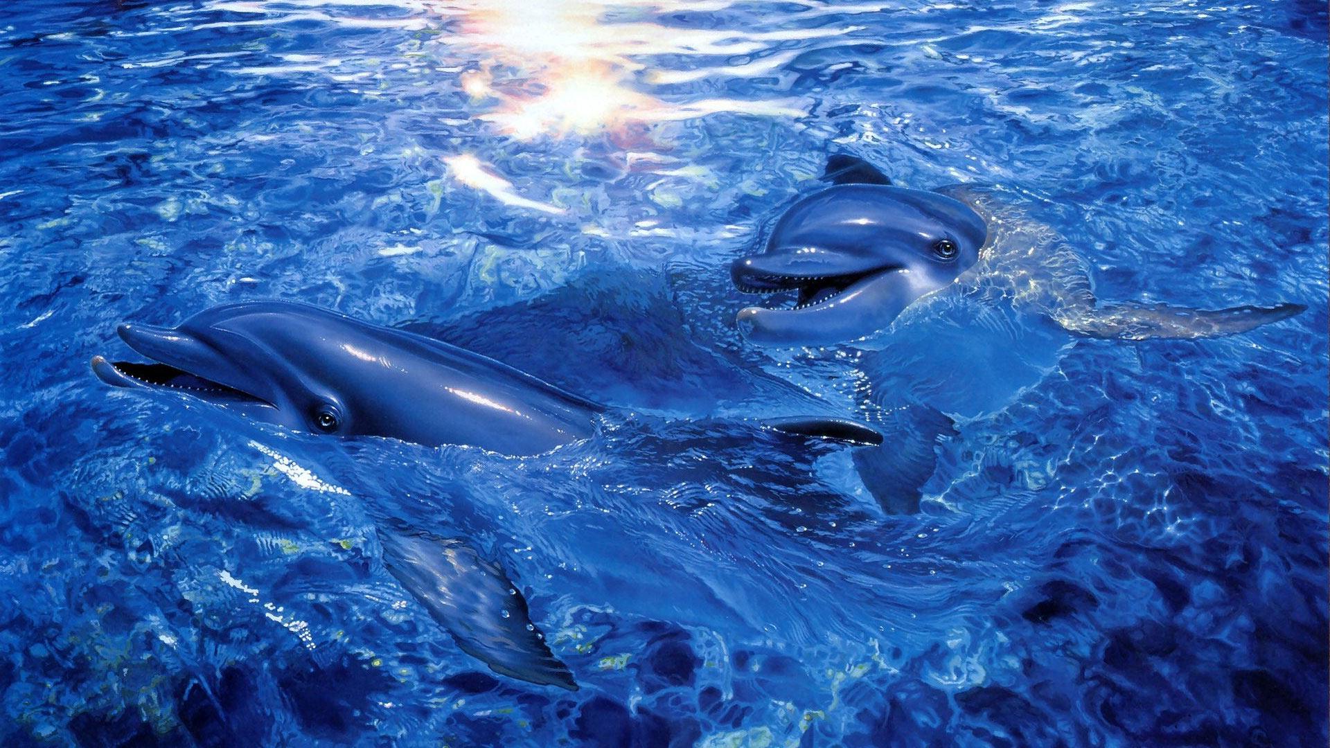 Бесплатно скачать картинки с дельфинами 8