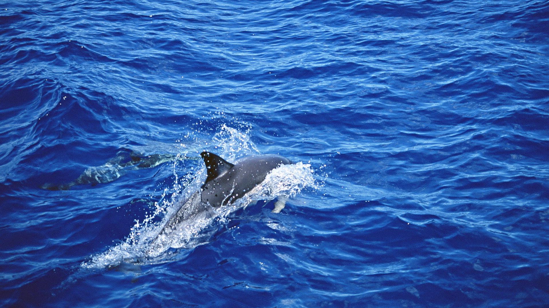 картинки для рабочего стола море и дельфины