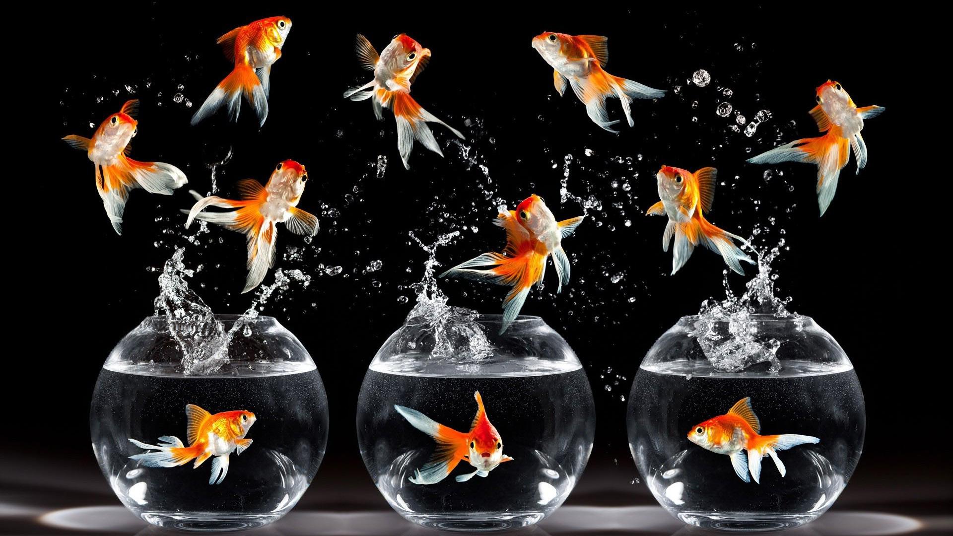 Рыбки картинки для детей цветные - 7e