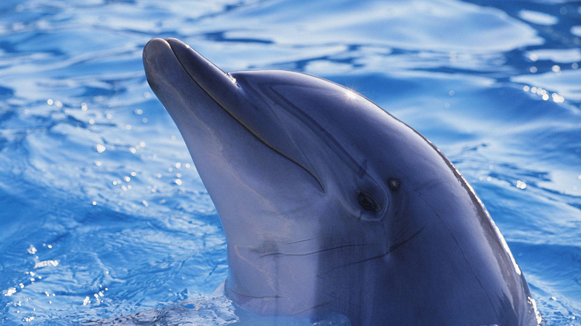 обои Симпатичный дельфин,...