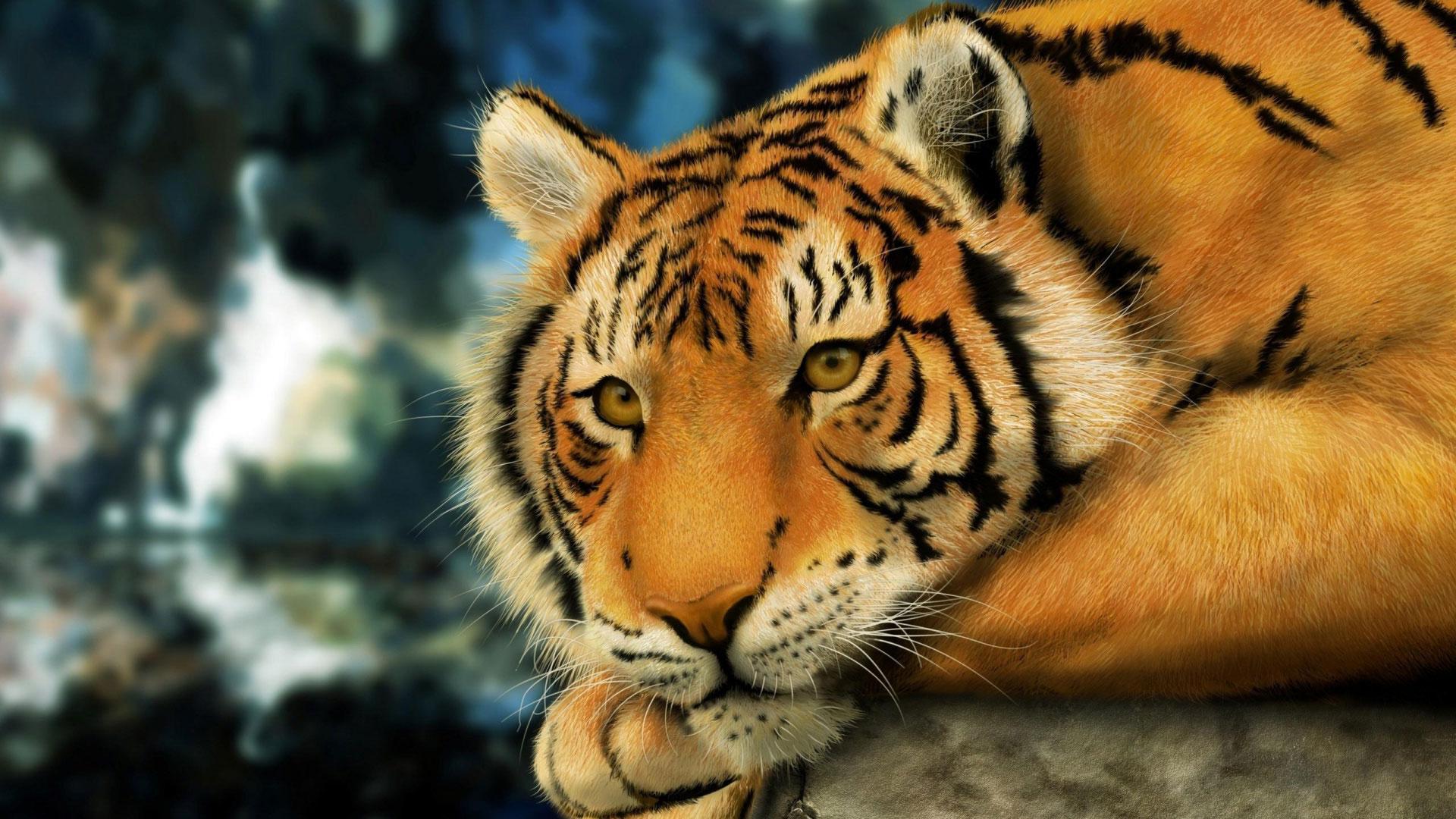 Обои Уссурийский тигр , картинки - Обои ...: etsphoto.ru/tigr-amurskiyy-foto-oboi.html