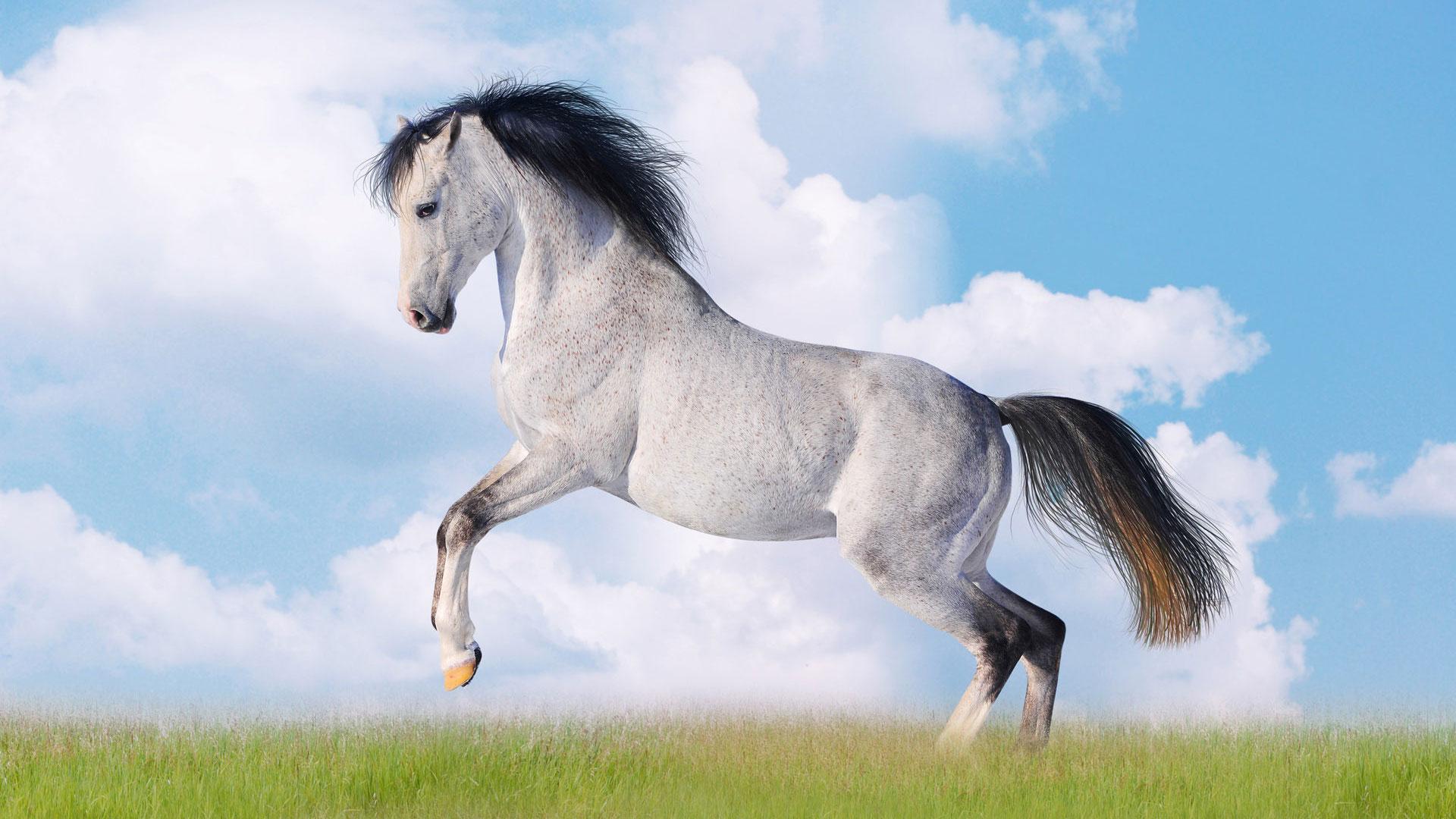 horse jumping игры