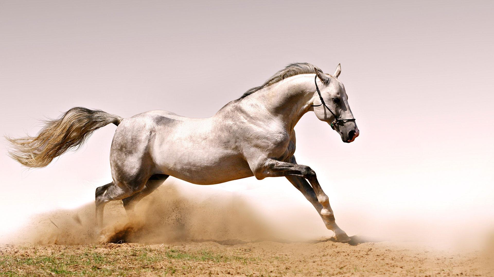 лошади сайт игры