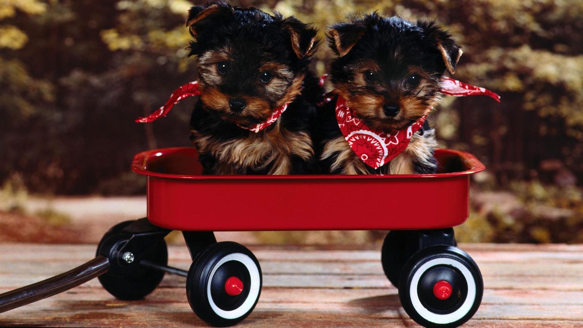 Обои для рабочего стола собаки овчарки