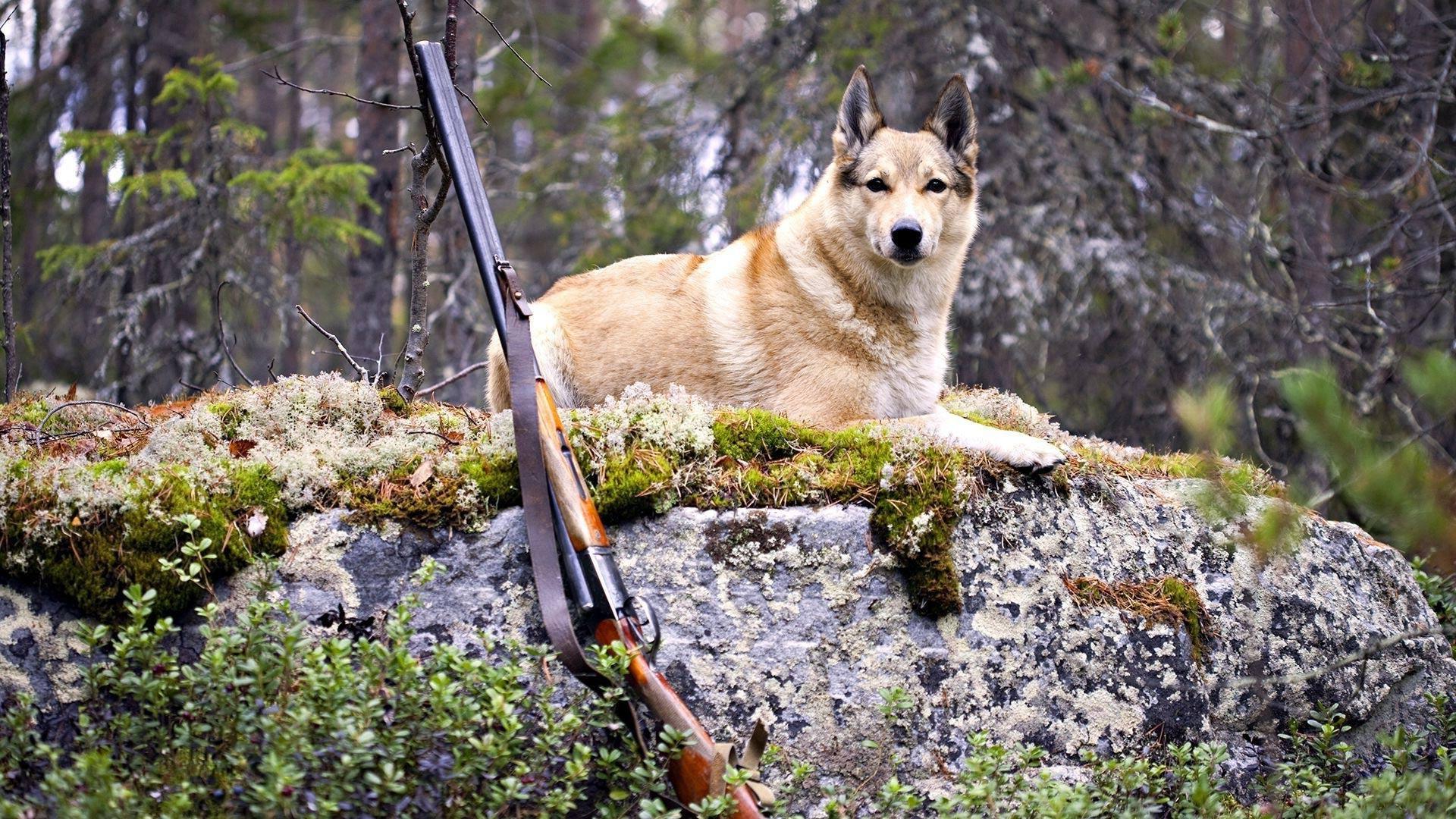 589054189 В Арцизе собака подстрелила хозяина