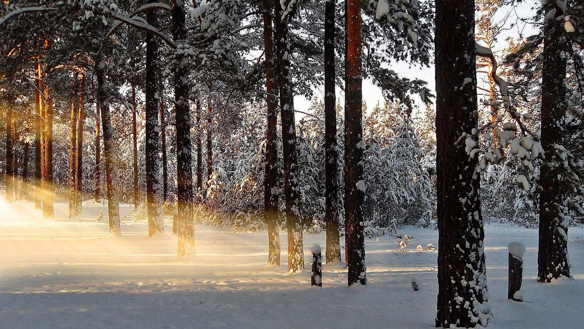 Лес Зимой Картинки На Рабочий Стол